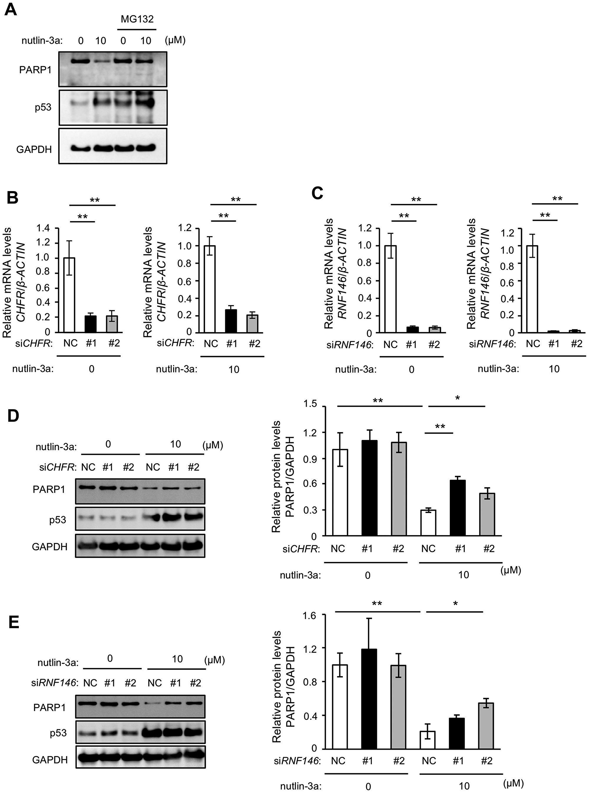 Nutlin-3a-induced PARP1 protein reduction is mediated by proteasomal degradation.