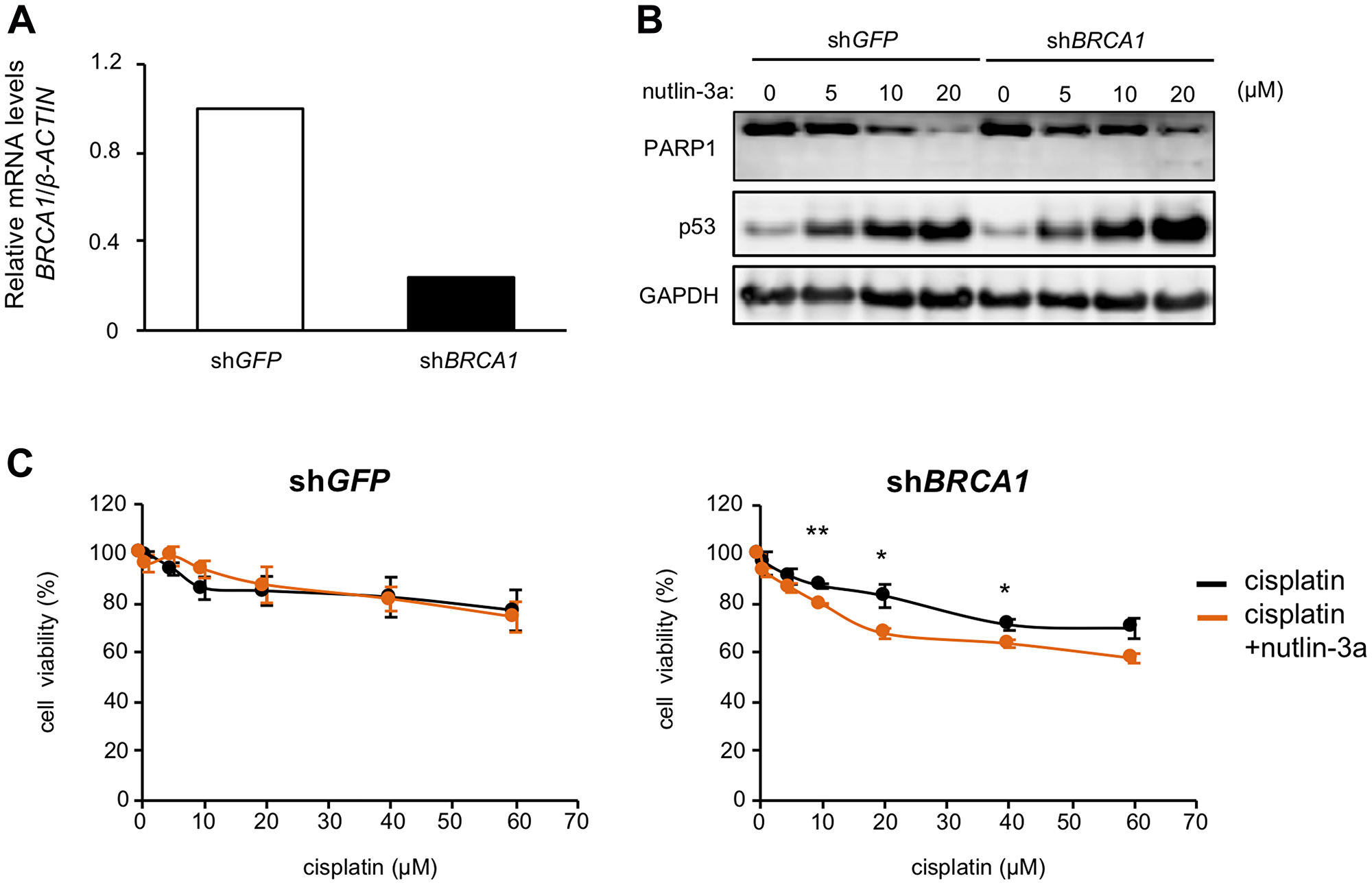 Nutlin-3a enhances the effect of cisplatin in BRCA1 knockdown MCF-7 cells.