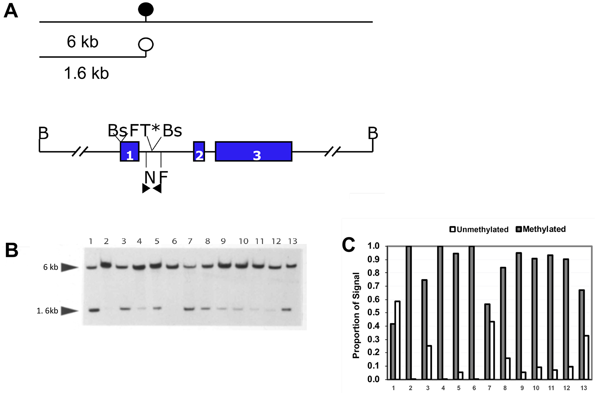 Quantitative methylation analysis shows that the NNAT CpG island is hypermethylated in human osteosarcoma tumor samples.