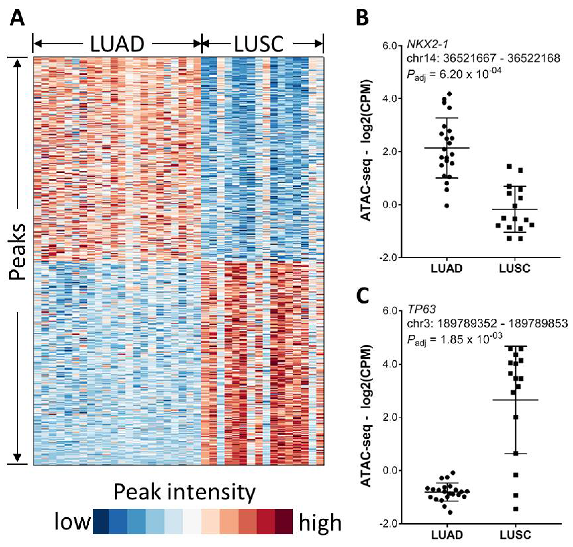 Association of chromatin accessibility with tumor histology.