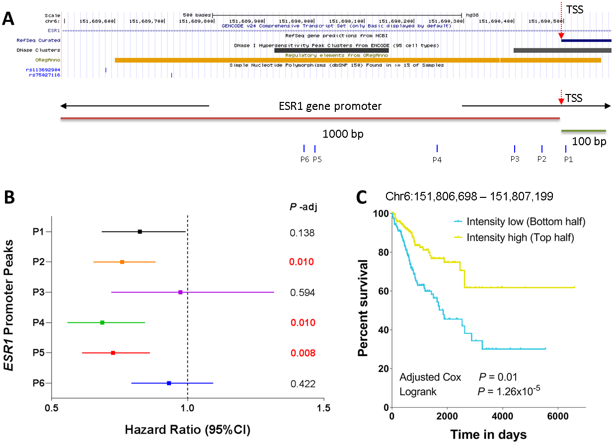 Correlation of ESR1 promoter peaks with survival.