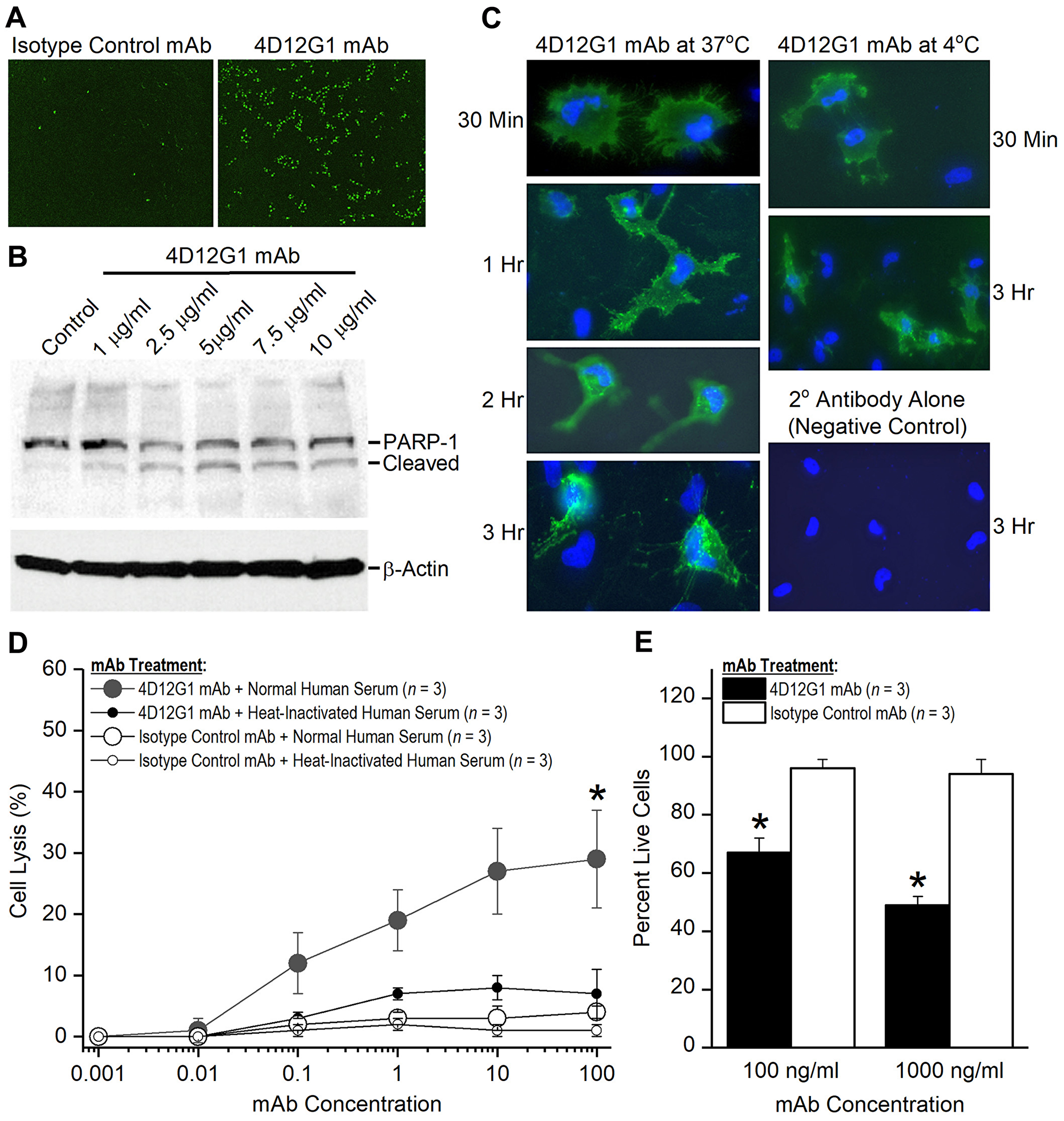 The 4D12G1 mAb kills EOC cells by inducing apoptosis, CDC, and ADCP.