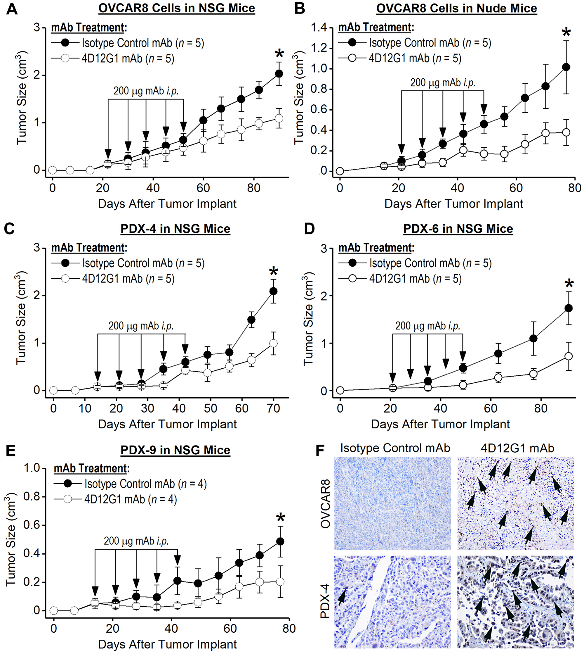 The 4D12G1 mAb inhibits growth of human EOC xenografts.