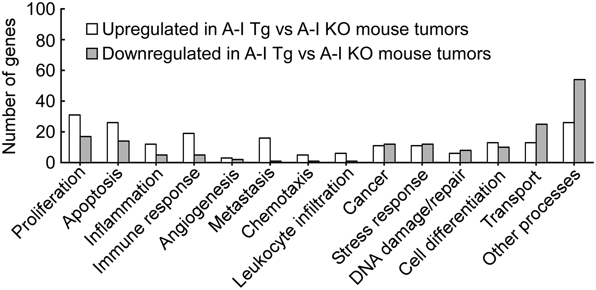 Genes from differential analysis of B16F10L tumors from A-I Tg+/– versus A-I KO mapped to key cancer related biological processes.