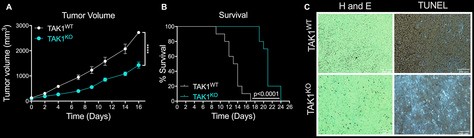 The efficacy of TAKKO in inhibiting tumor growth and reducing survival rates in vivo.