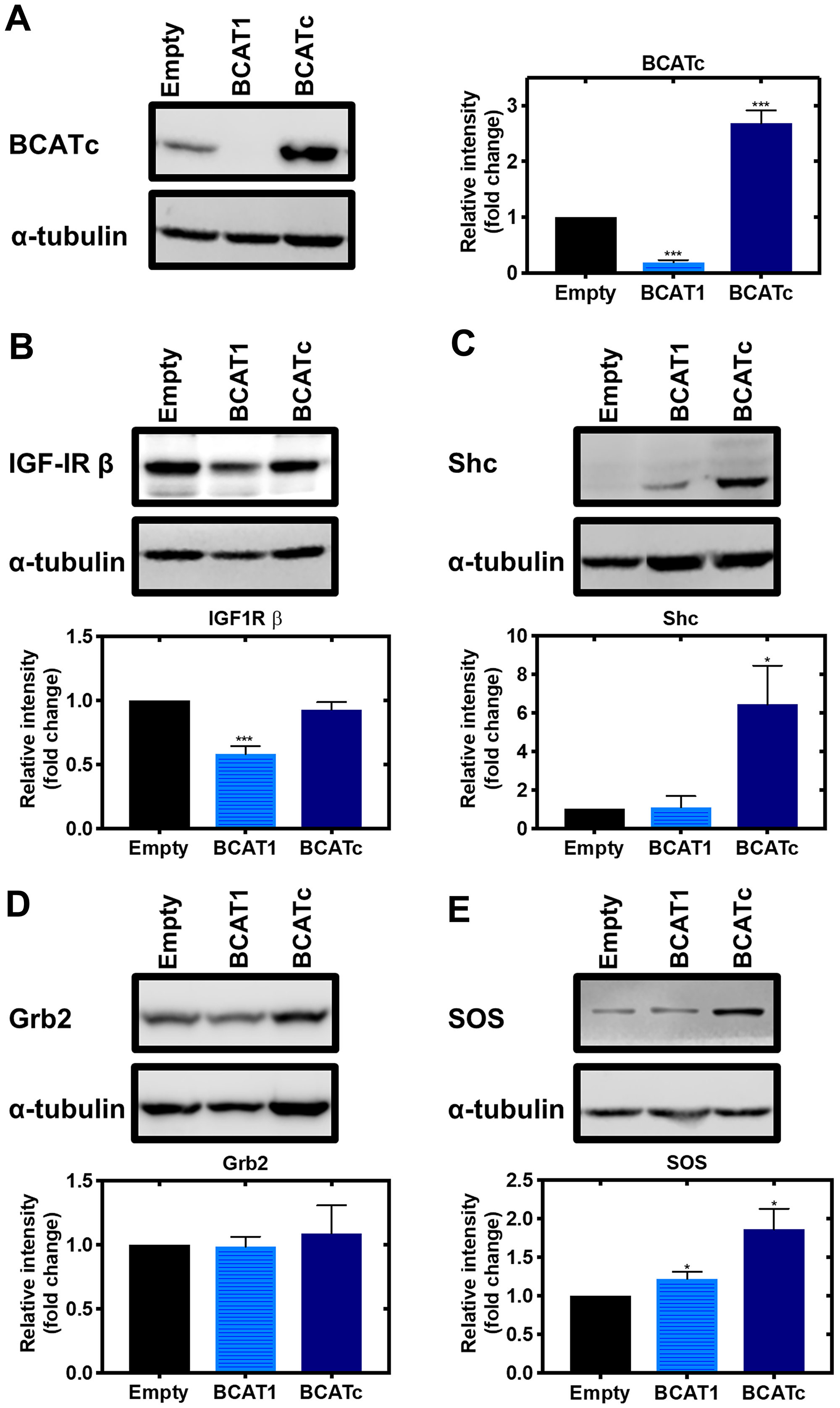 Knockdown and overexpression of BCAT1 regulates IGF-1/insulin signalling cascade in MDA-MB-231 cells.