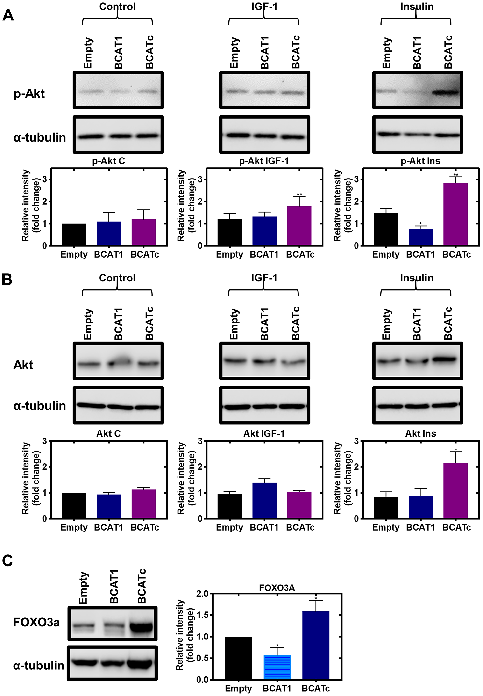 Knockdown and overexpression of BCAT1 regulates the PI3K/Akt axis in MDA-MB-231 cells.