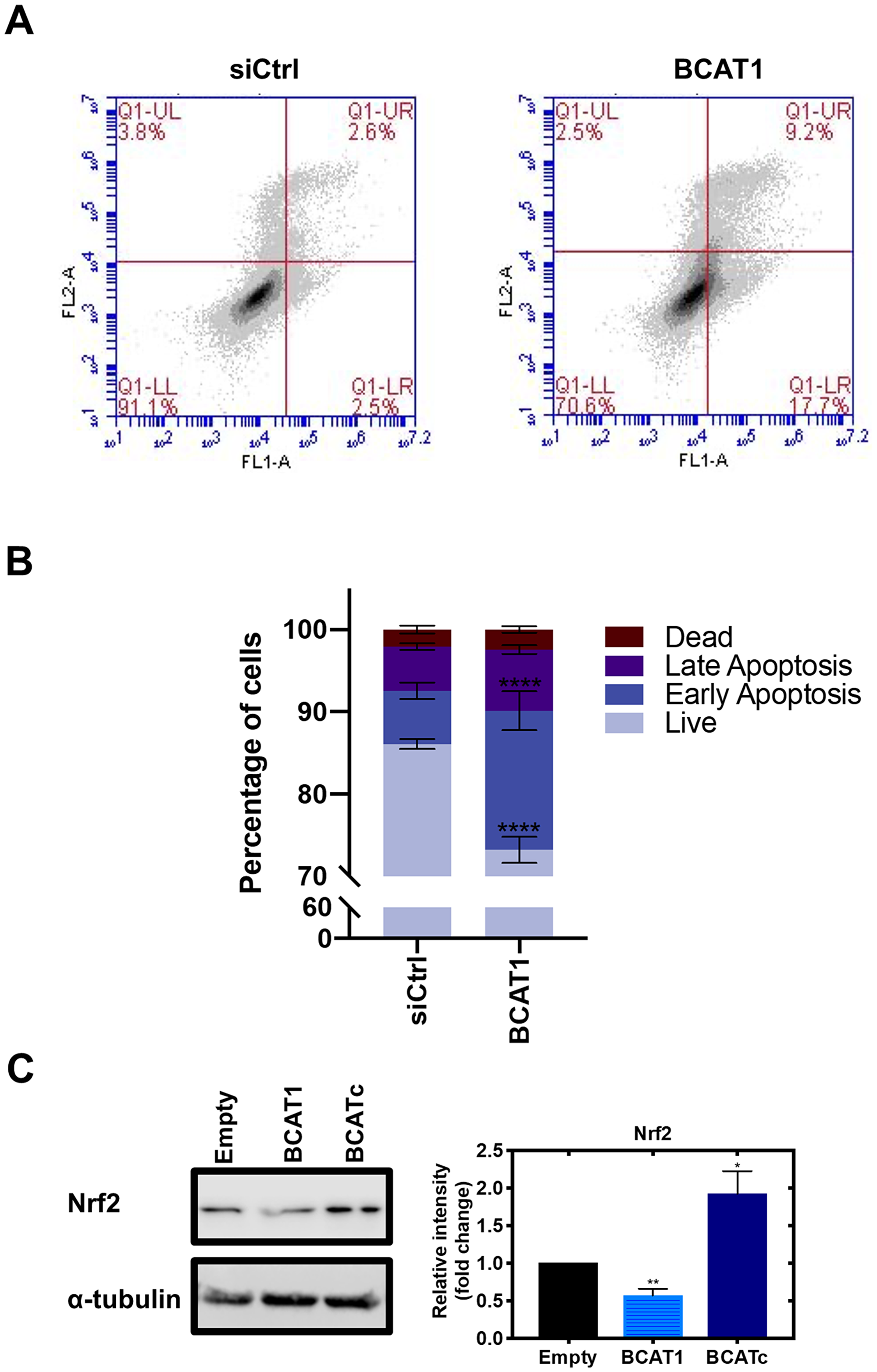 BCAT1 promotes tumour cell survival by evasion of apoptosis.