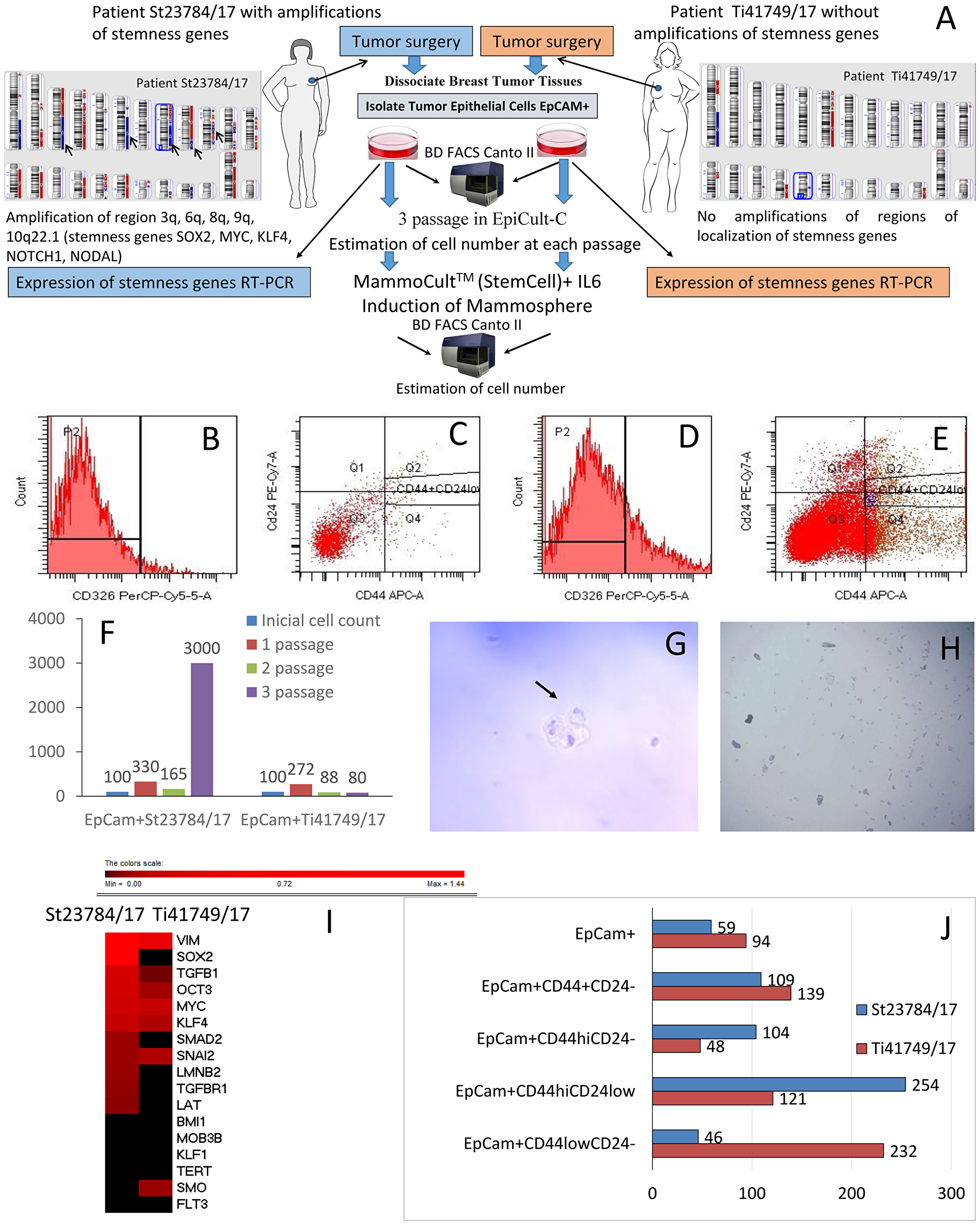 The significance of stemness gene amplifications for stem-like cancer cell activity.