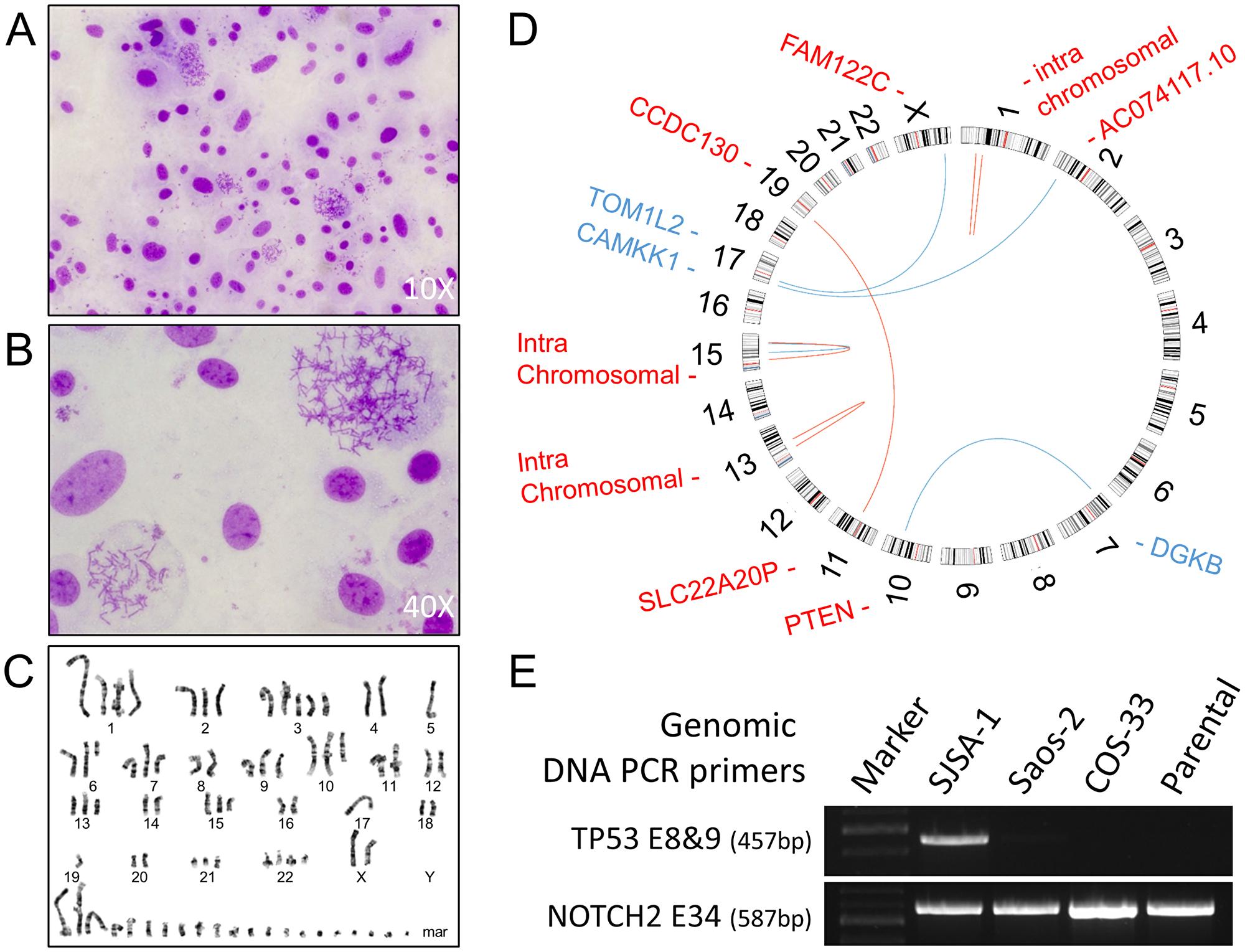 Conventional cytogenetics analysis and genomic analysis.