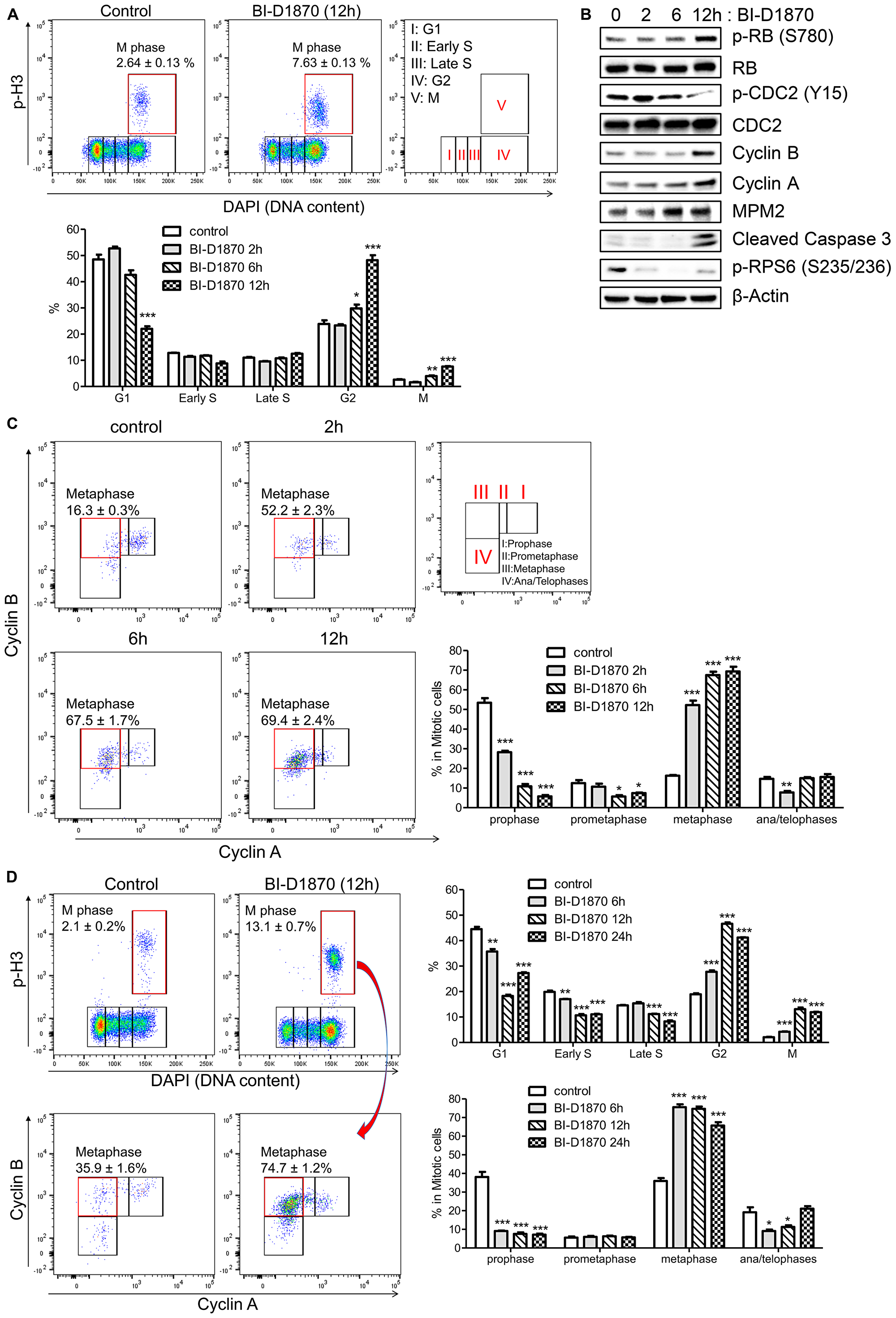BI-D1870 treatment induces mitotic arrest and apoptosis in HL60 cells.