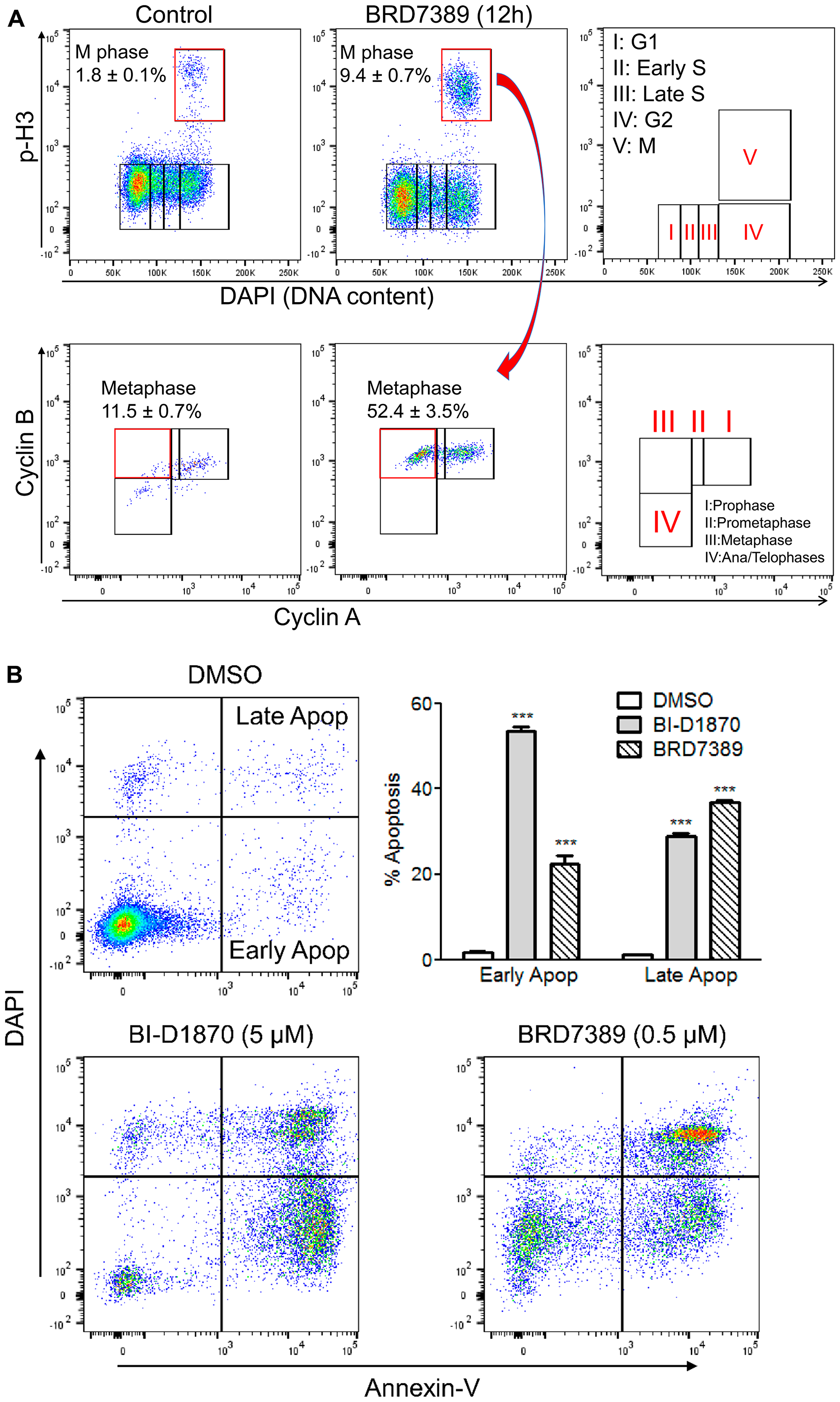 BRD7389 treatment induces metaphase arrest and apoptosis in HL60 cells.
