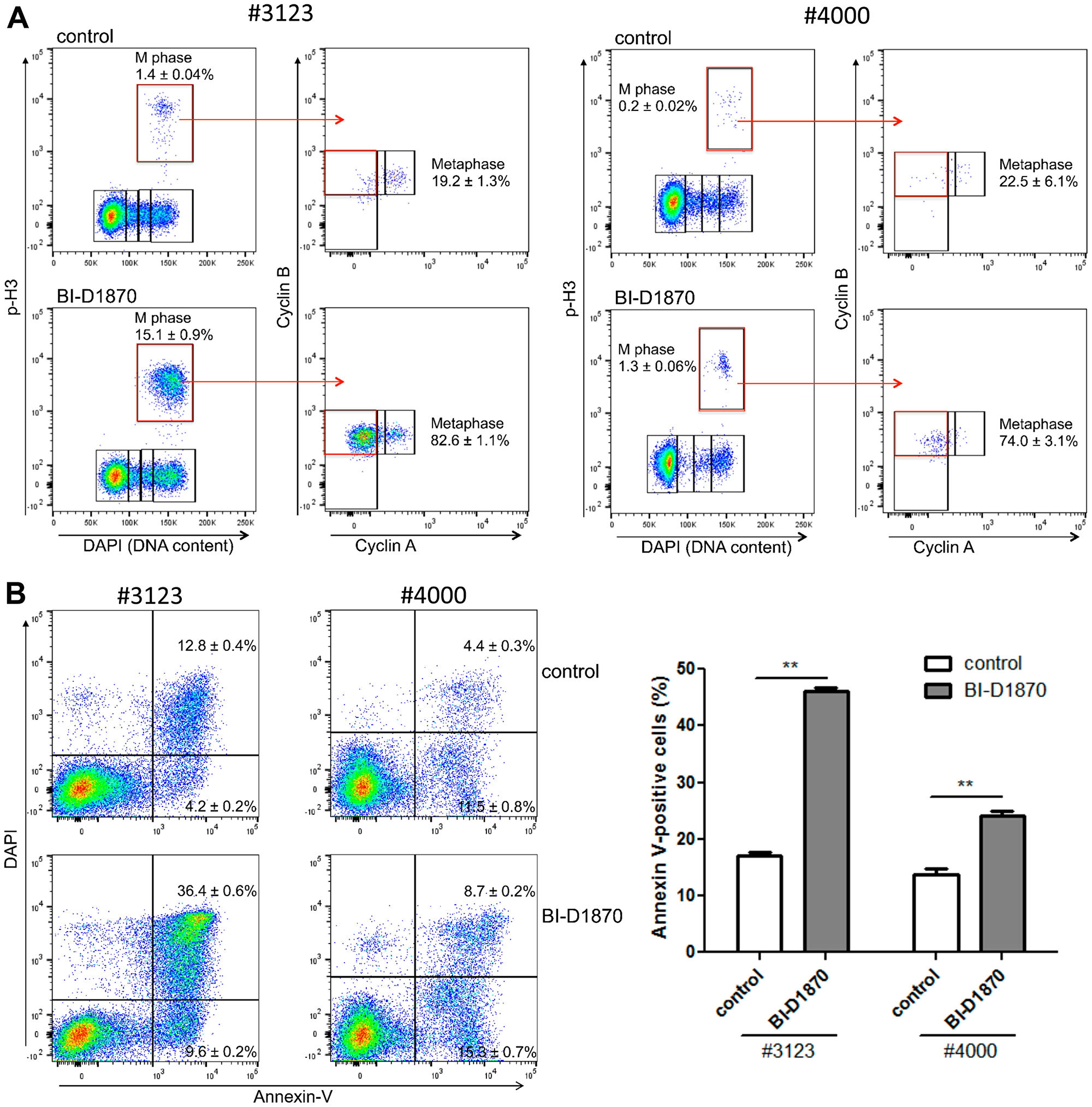BI-D1870 treatment induces metaphase arrest and apoptosis in primary patient AML cells.