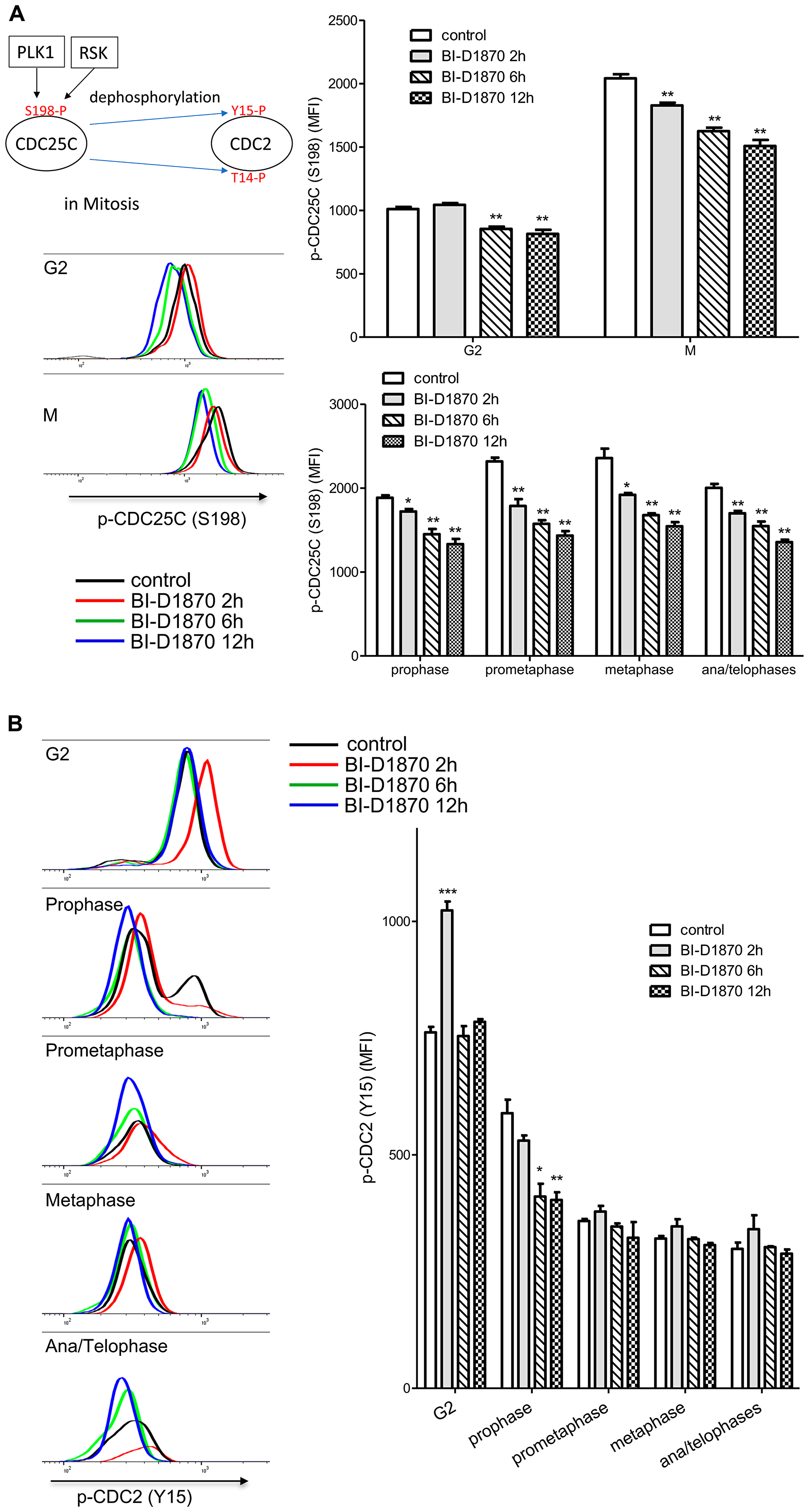 Effect of BI-D1870 on CDC2 and CDC25C activation.