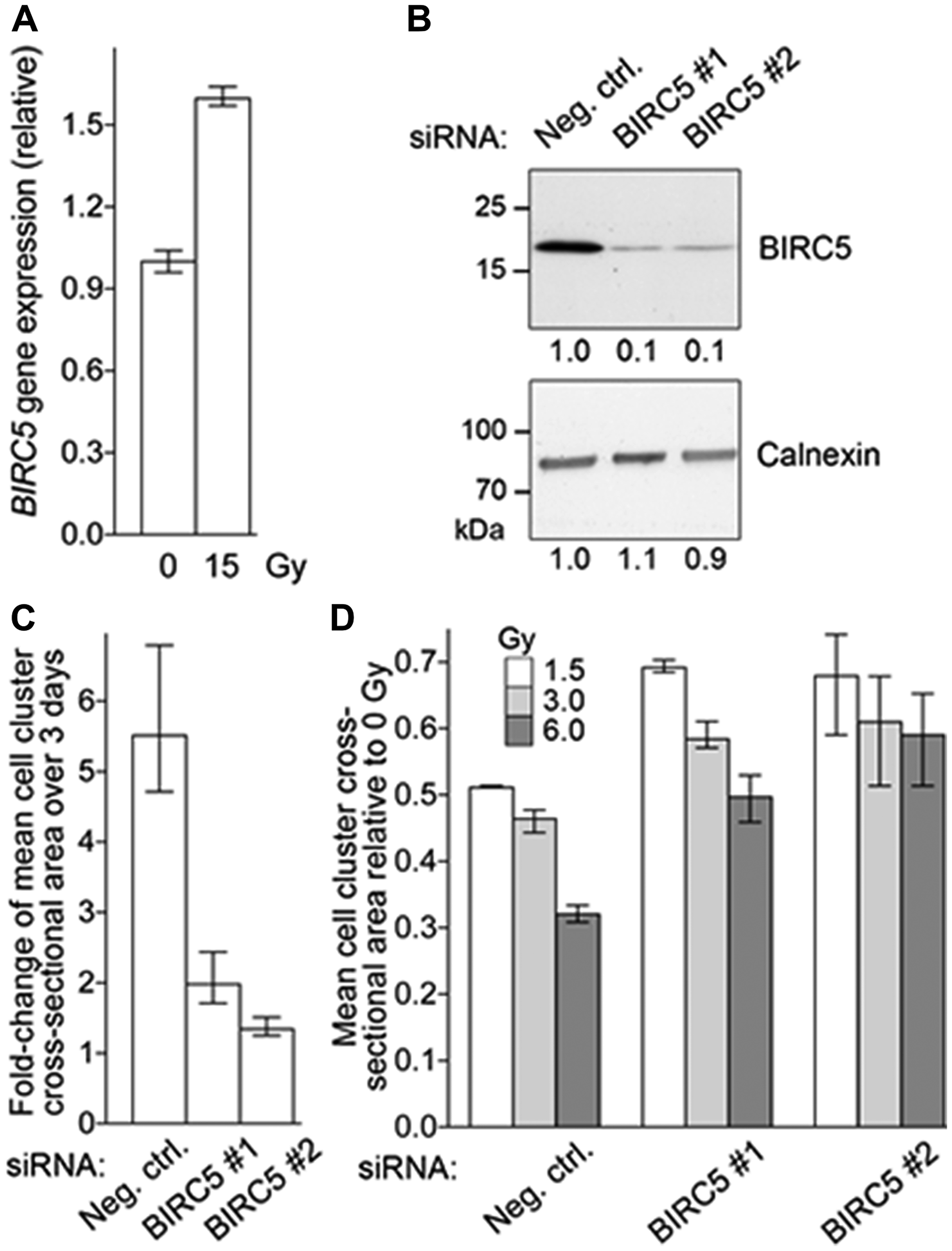 BIRC5 mRNA Expression in NET Cell Line.