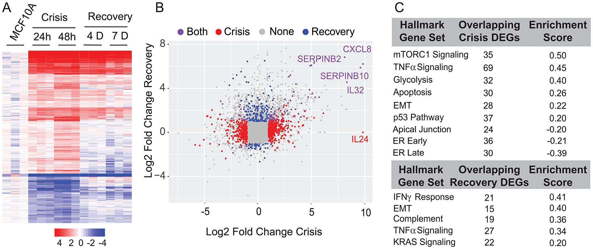 Differential expression and pathway analysis of RNA-Seq shows changes in key regulatory pathways involved in cell proliferation, metabolism, cell cycle control, ER (estrogen response), and EMT.