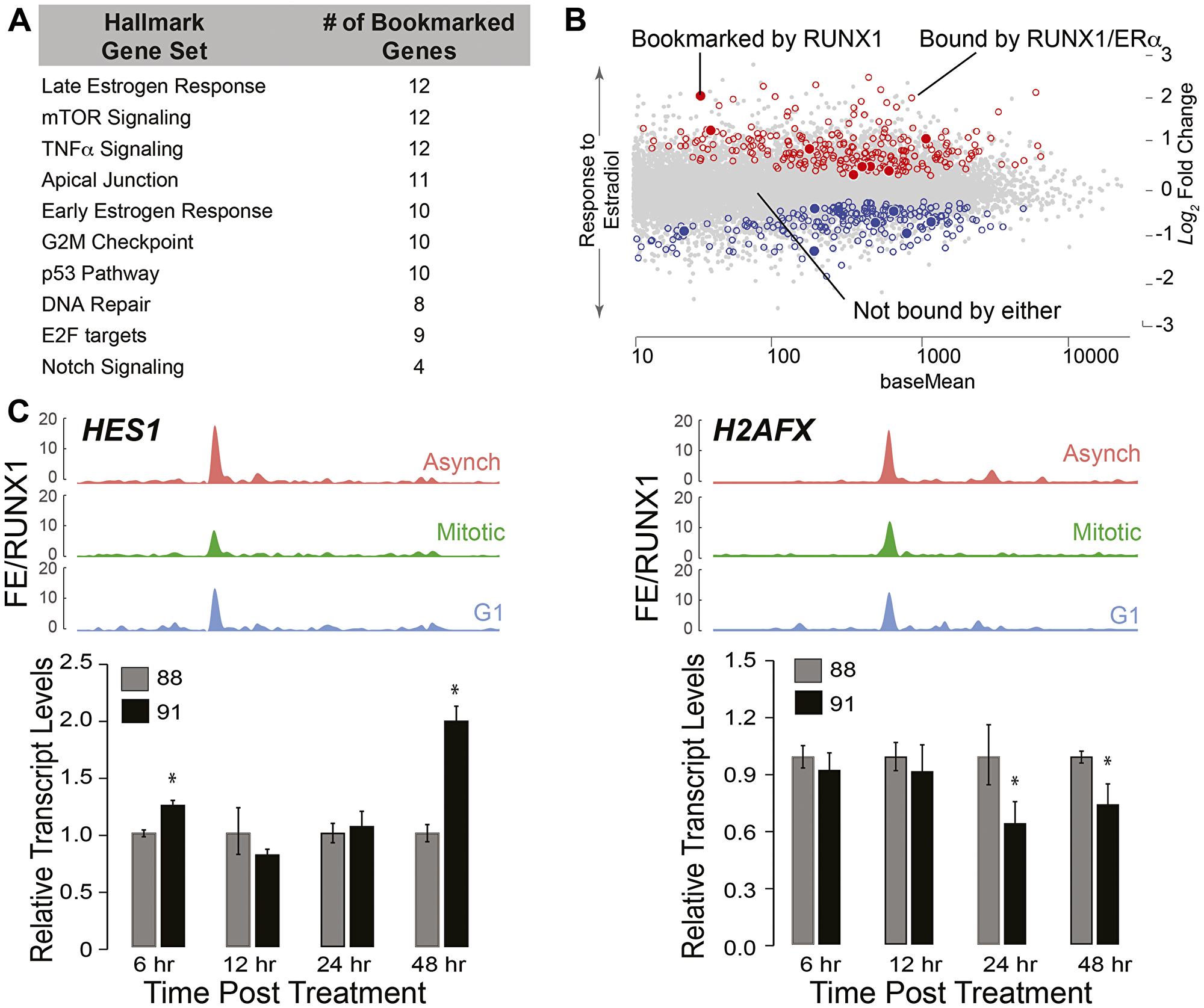 RUNX1-CBFβ complex is a key regulator of the epithelial transcriptome associated with hormone-responsiveness and mammary cell identity.