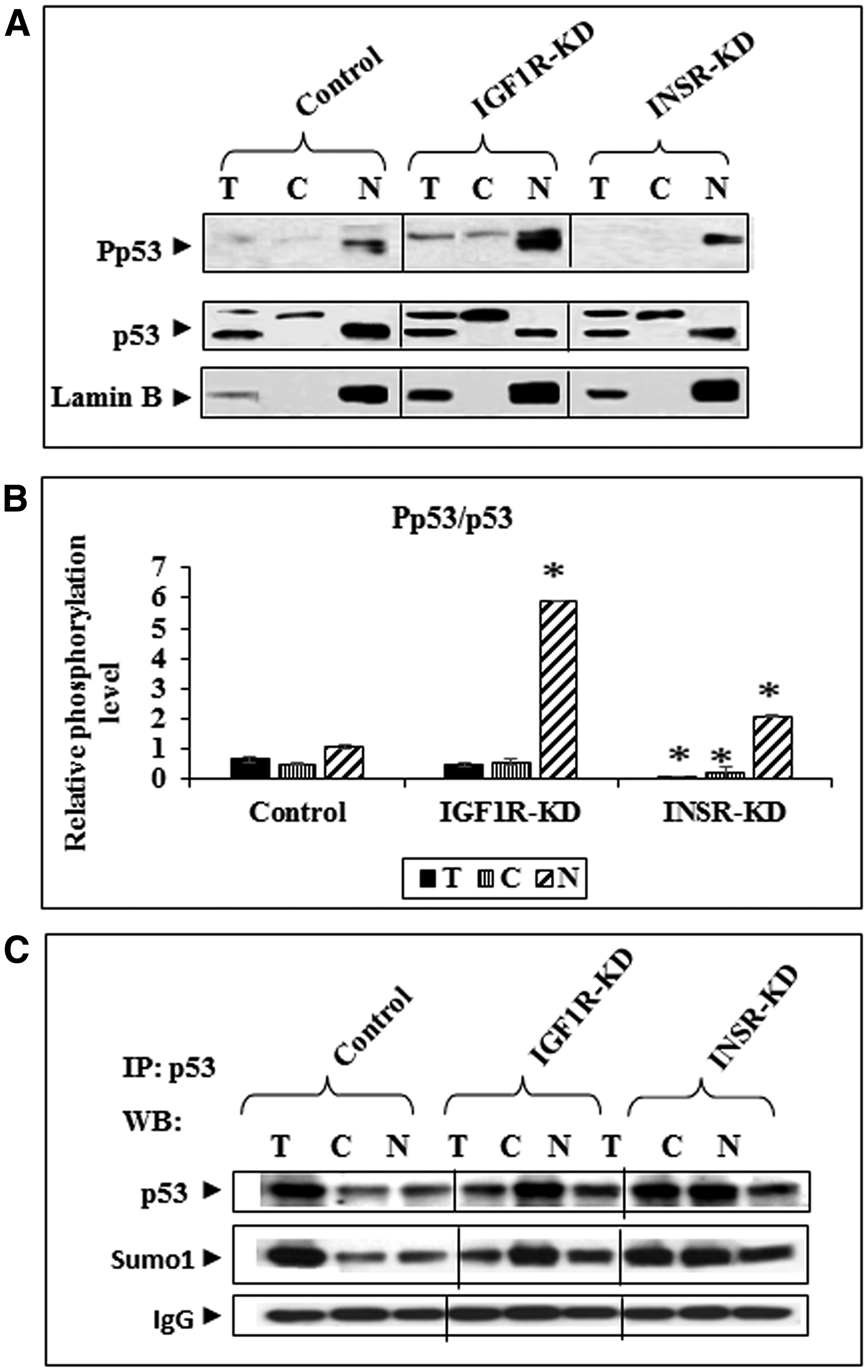 Western blot analysis of total and phospho-p53 in IGF1R-KD and INSR-KD cells.