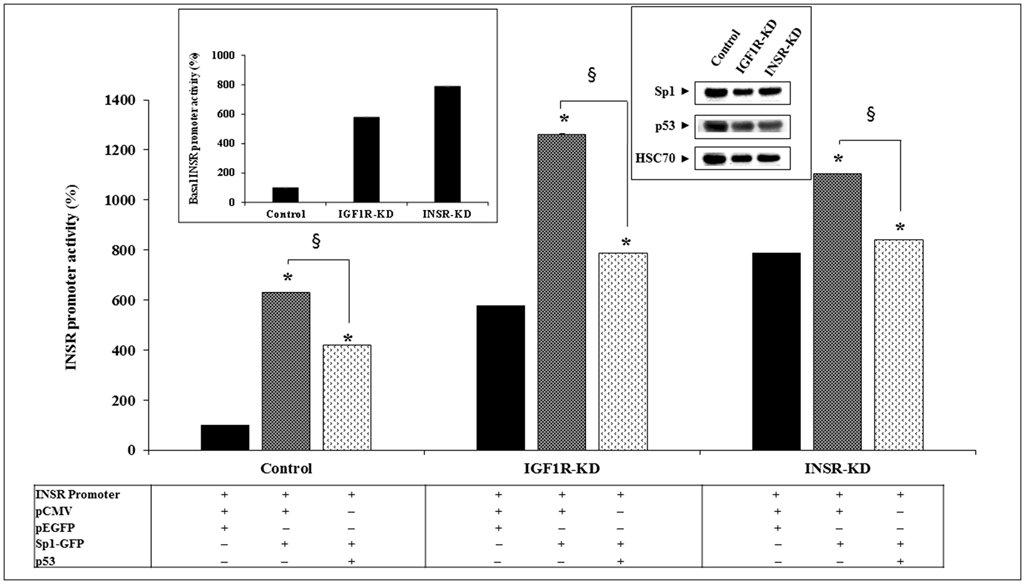 Effect of Sp1 on INSR promoter activity.