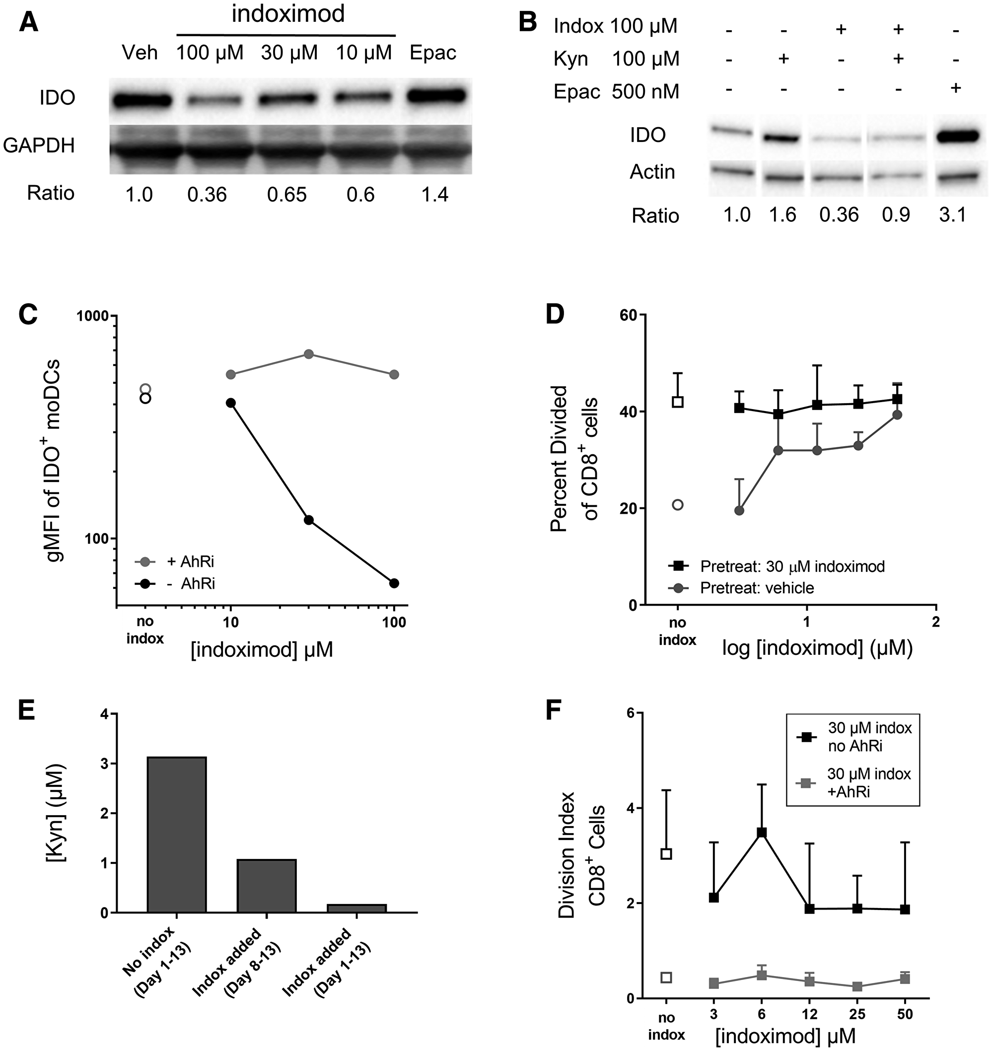 Indoximod downregulates IDO expression in moDC in an AhR-dependent manner.