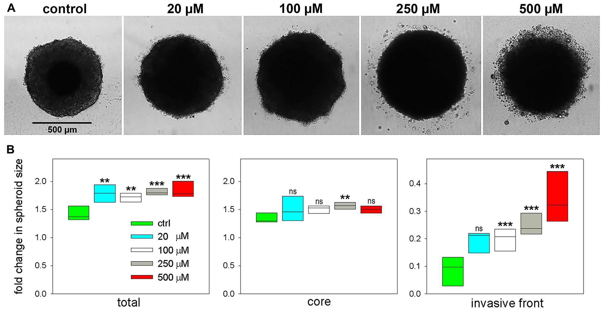 Effect of palmitoyl-lysophosphatidylcholine LPC[16:0] on tumor spheroid invasion and growth.