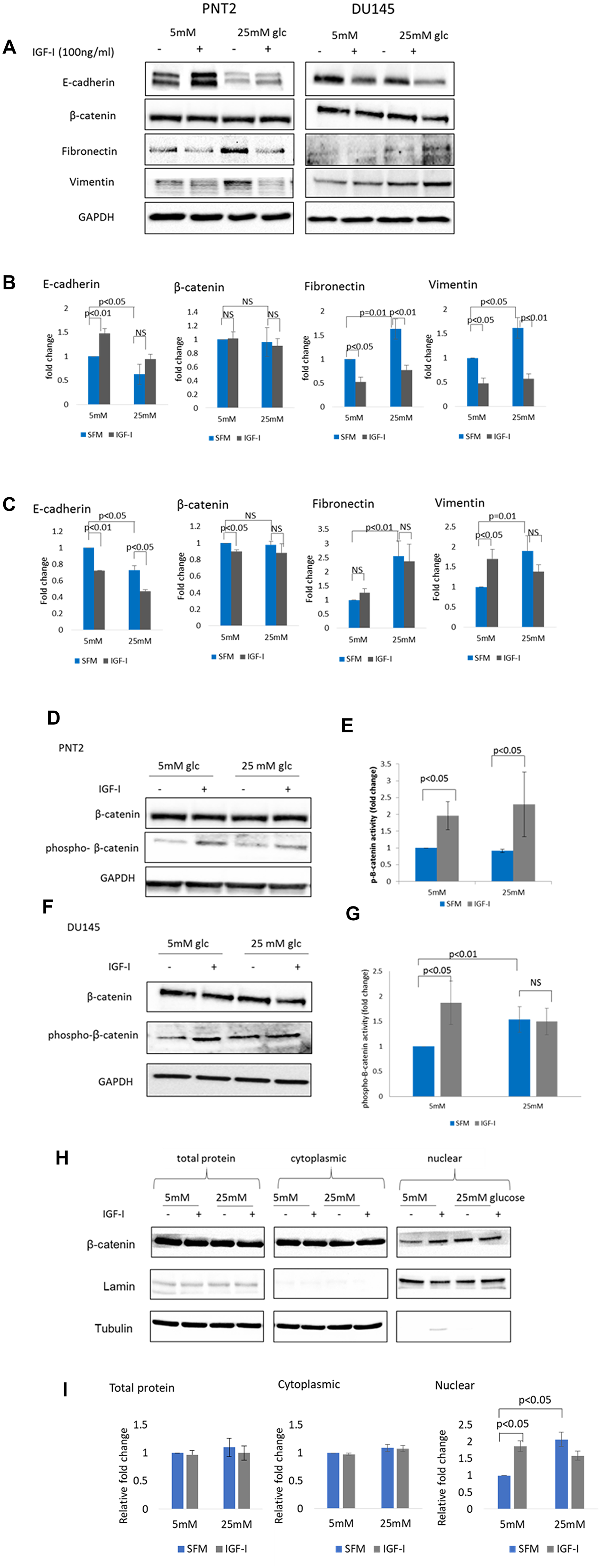 The effect of IGF-I on EMT markers in prostate epithelial cells in altered glucose condition.