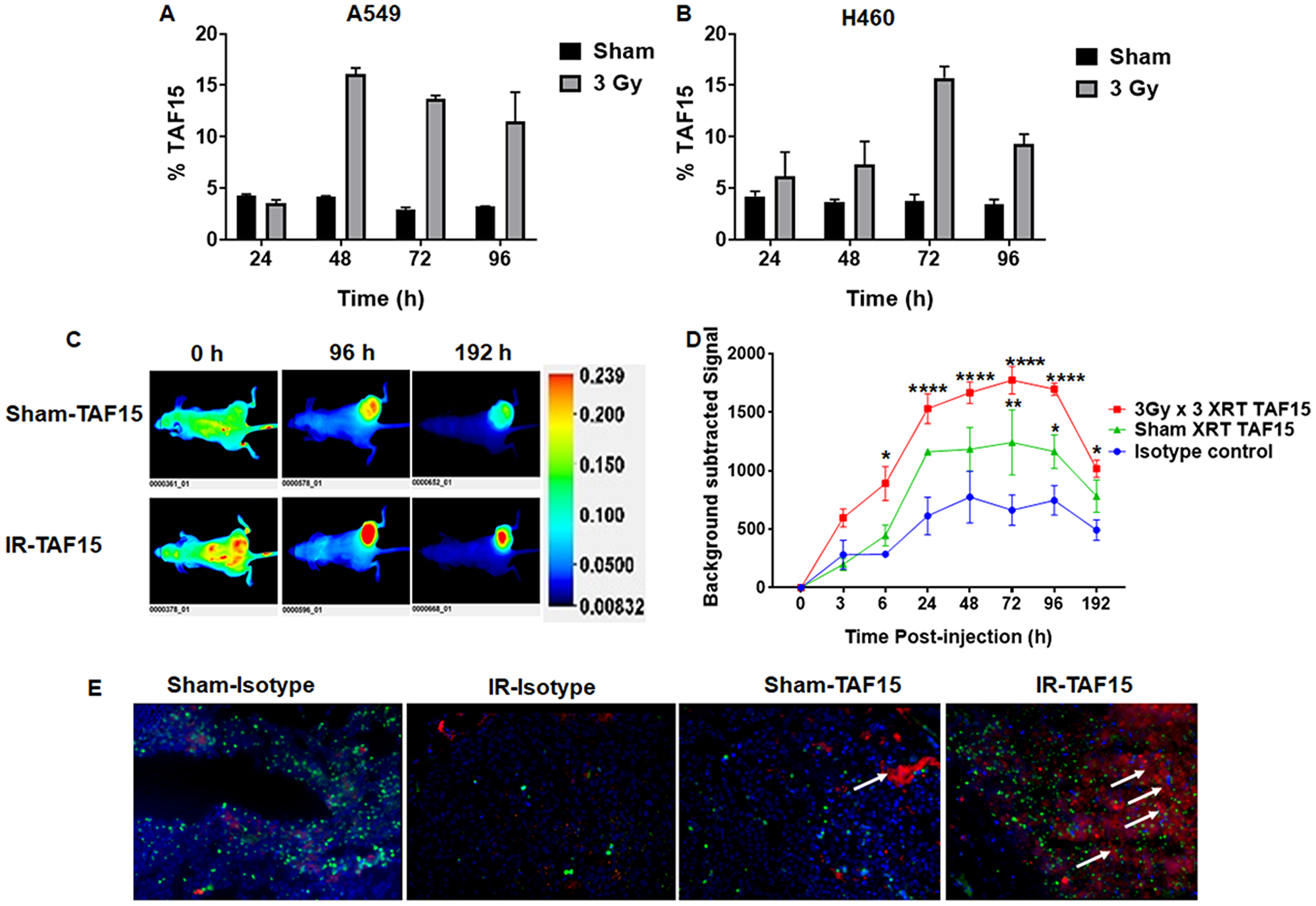 TAF15 is induced by radiation in vitro and in vivo.