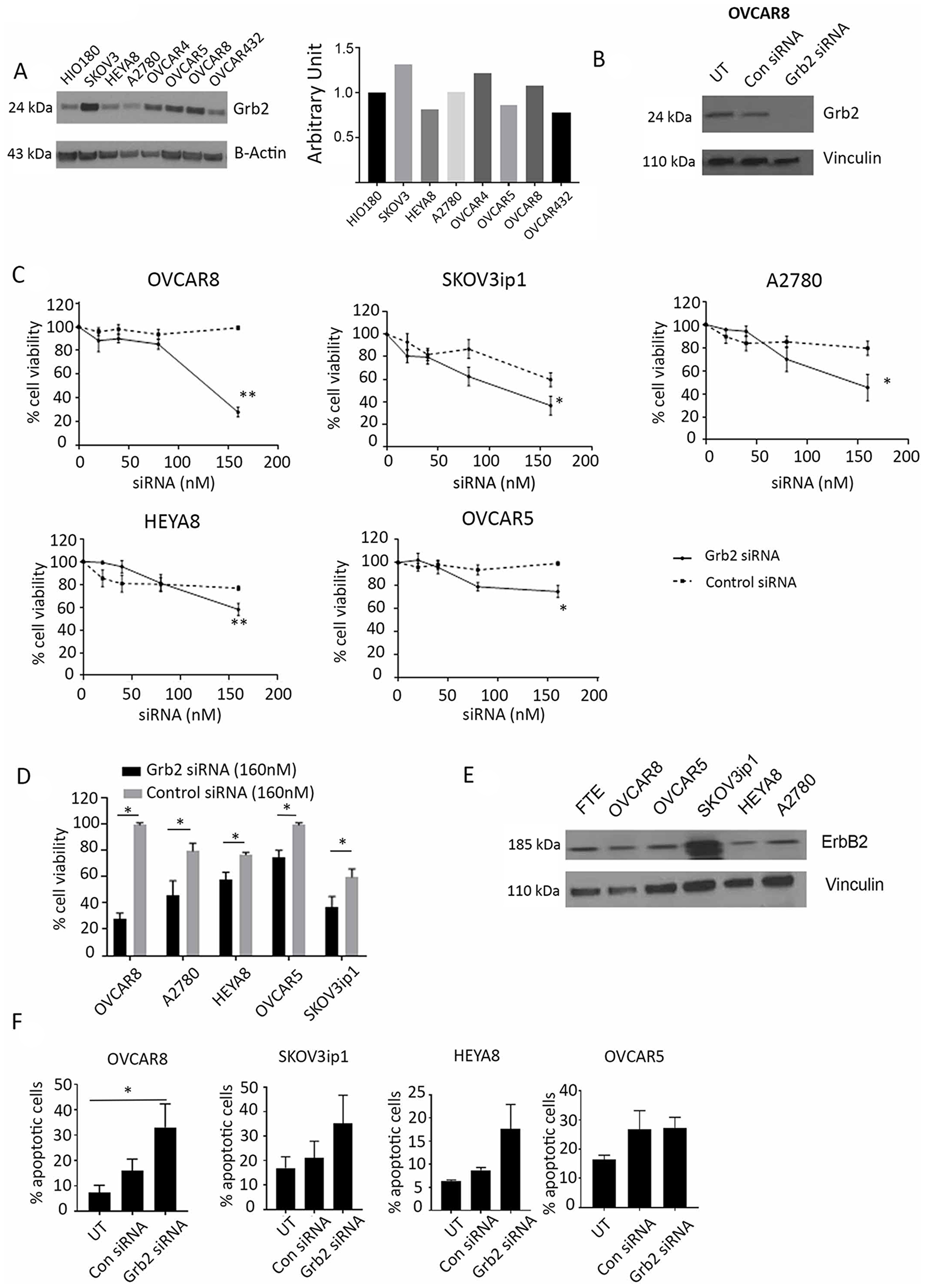 Effect of Grb2 downregulation on ovarian cancer cell lines.