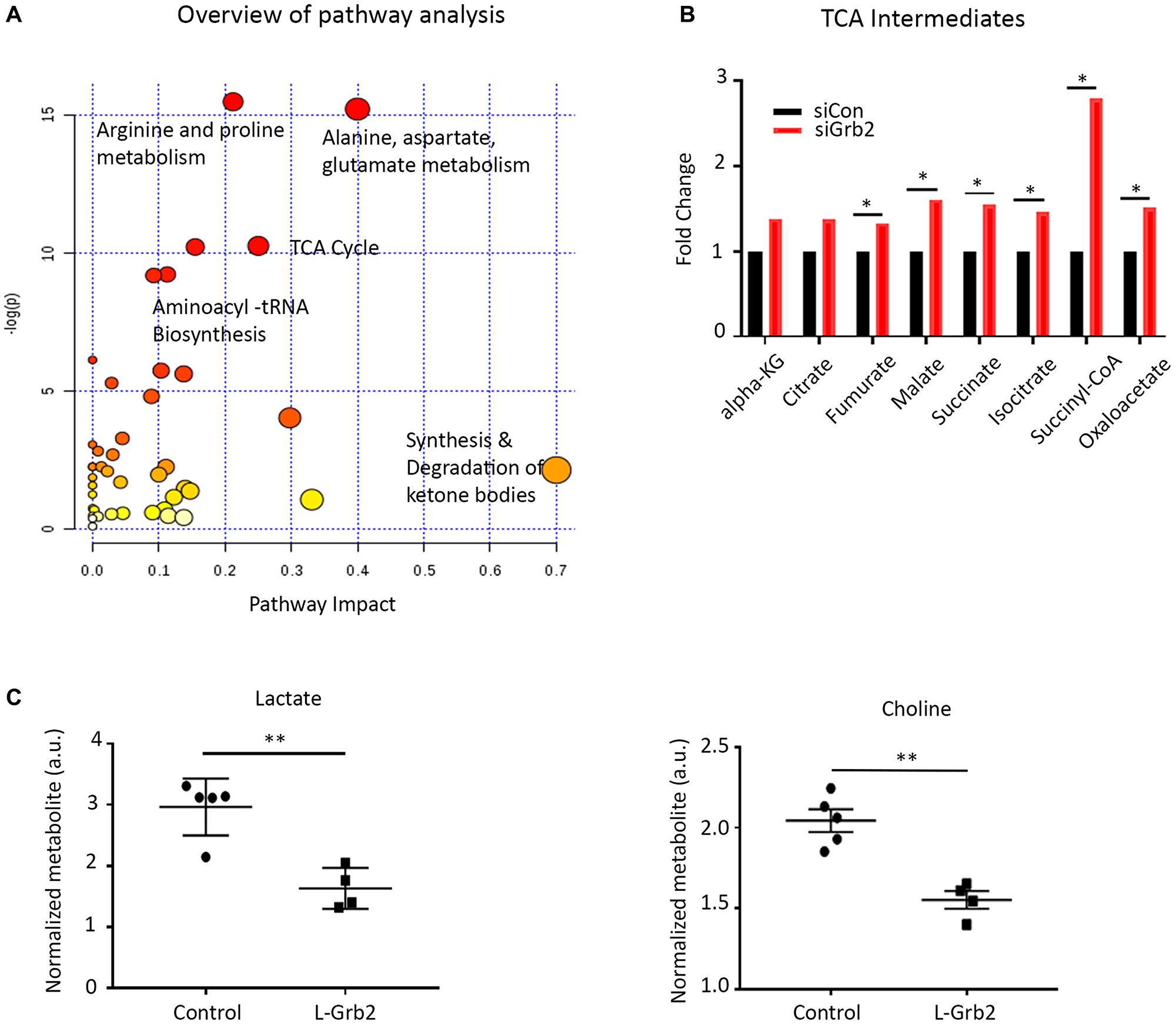 Effect of Grb2 downregulation on metabolite levels in ovarian cancer cells.