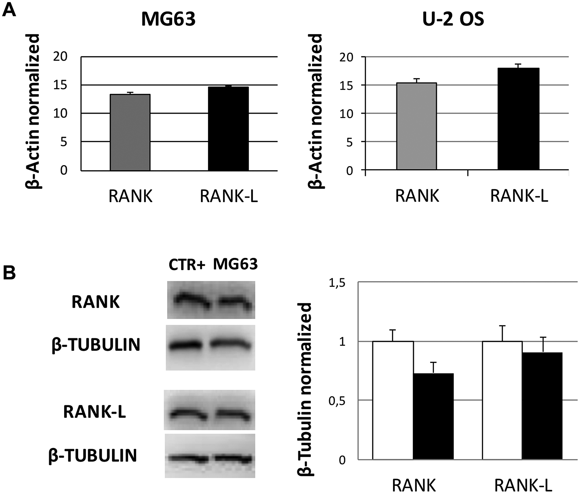 RANK and RANK-L mRNA and protein expression levels in OS cell lines.
