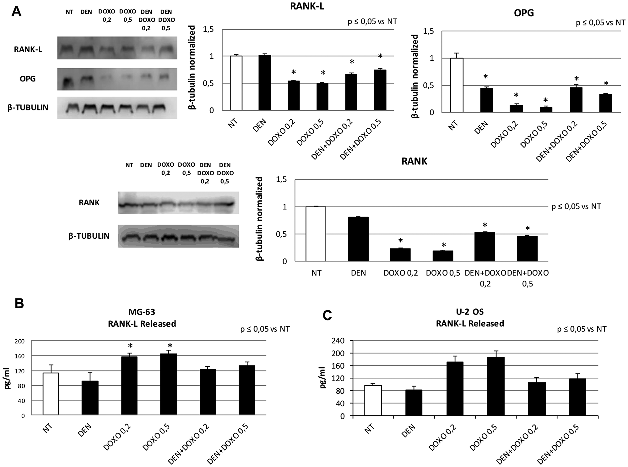 RANK, RANK-L and OPG protein expression levels and RANK-L released concentration after treatment with Den and Doxo in OS cell lines.