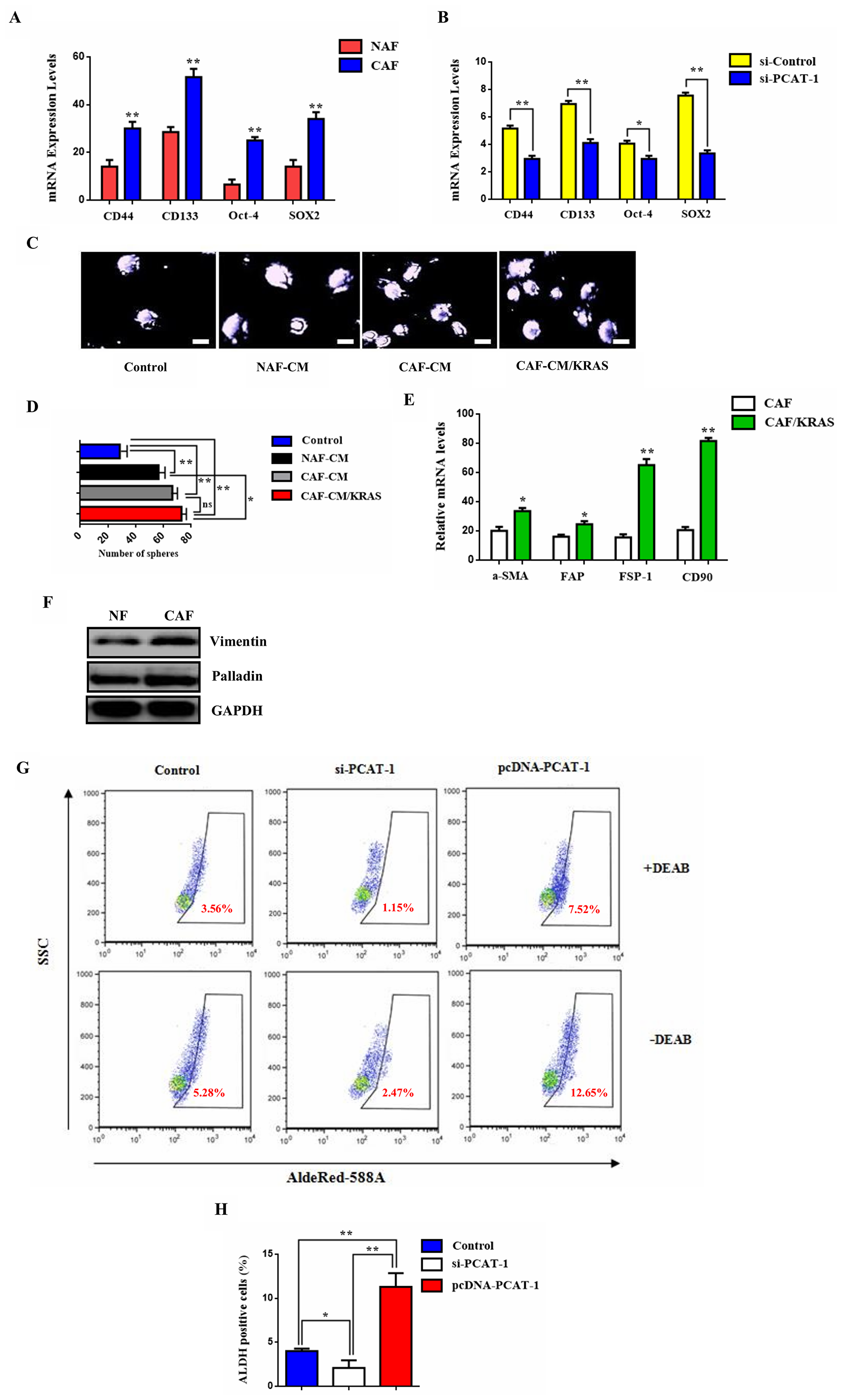 PCAT-1 activates the CD133/SOX2-related stem cell phenotype of metastatic tumor cells via myofibroblast differentiation.