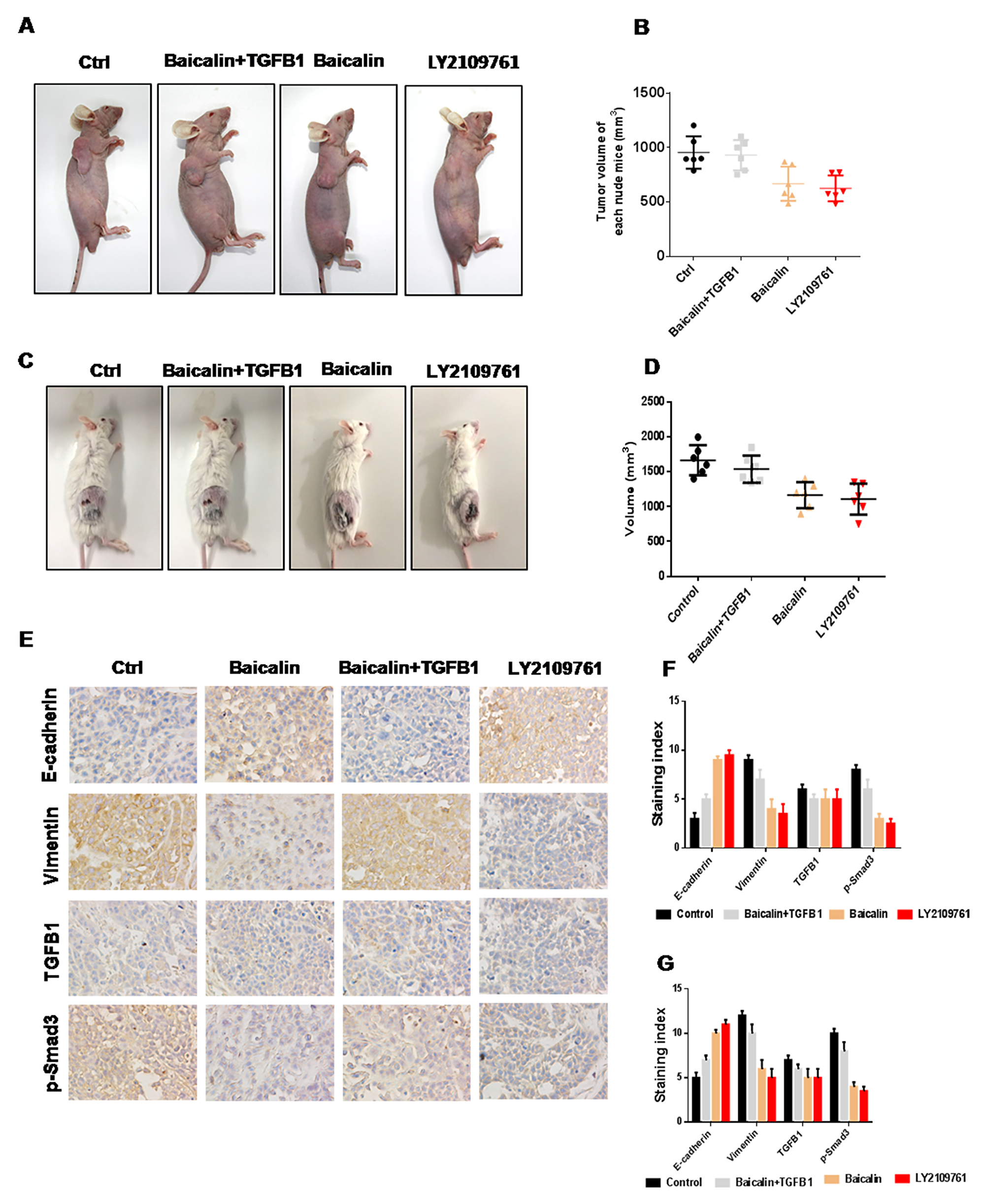 Baicalin suppressed the metastasis of breast cancer in vivo.