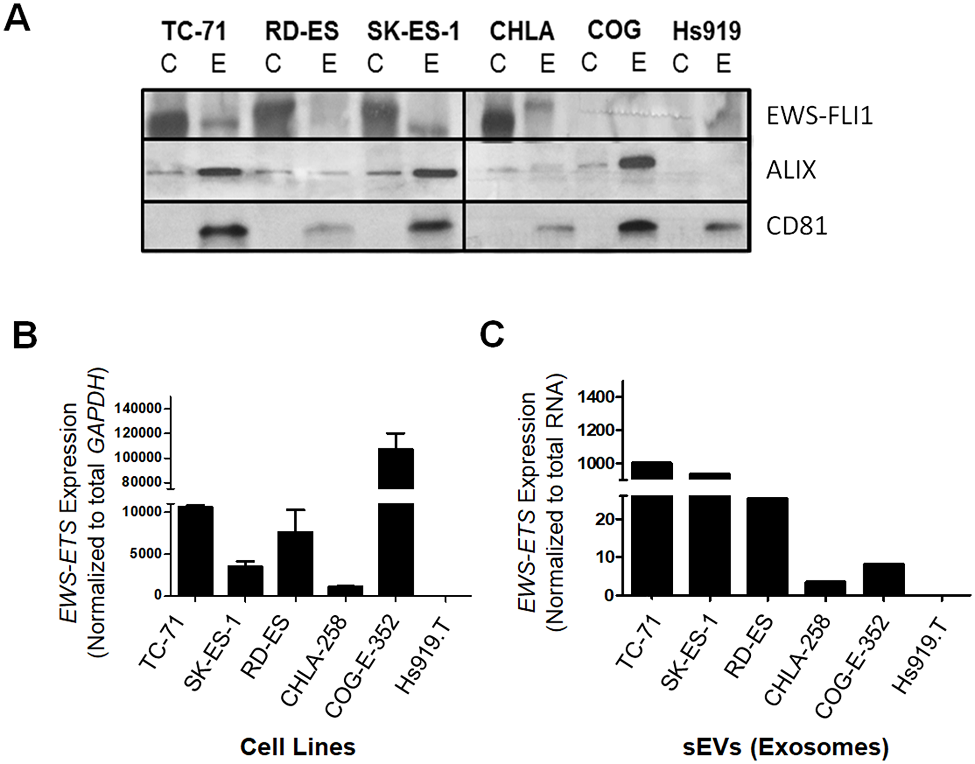 EWS-ETS transcript and protein are detected in ESFT cell lines and their corresponding sEVs.