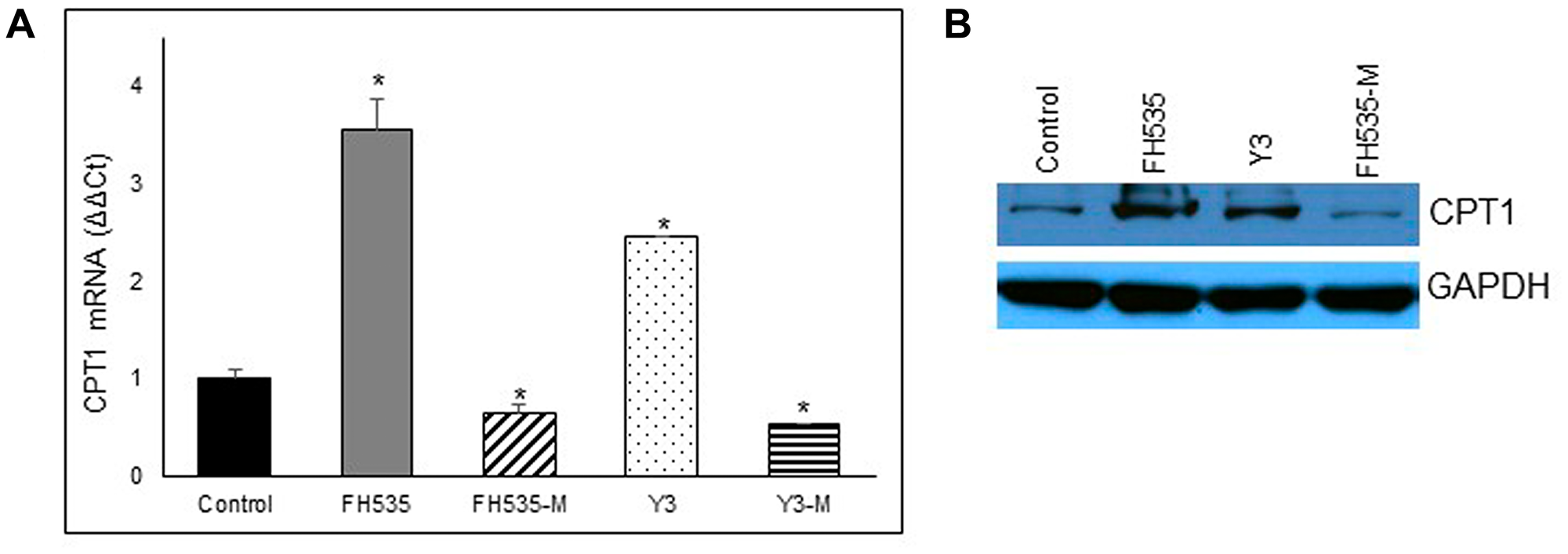 Effect of FH535 and derivatives on CPT1 expression.
