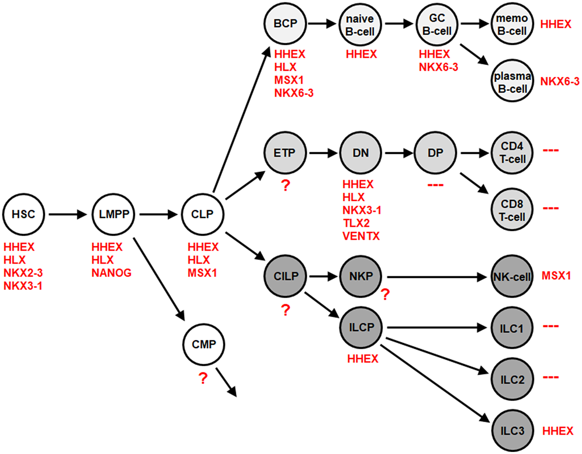 NKL-code for the lymphoid system.