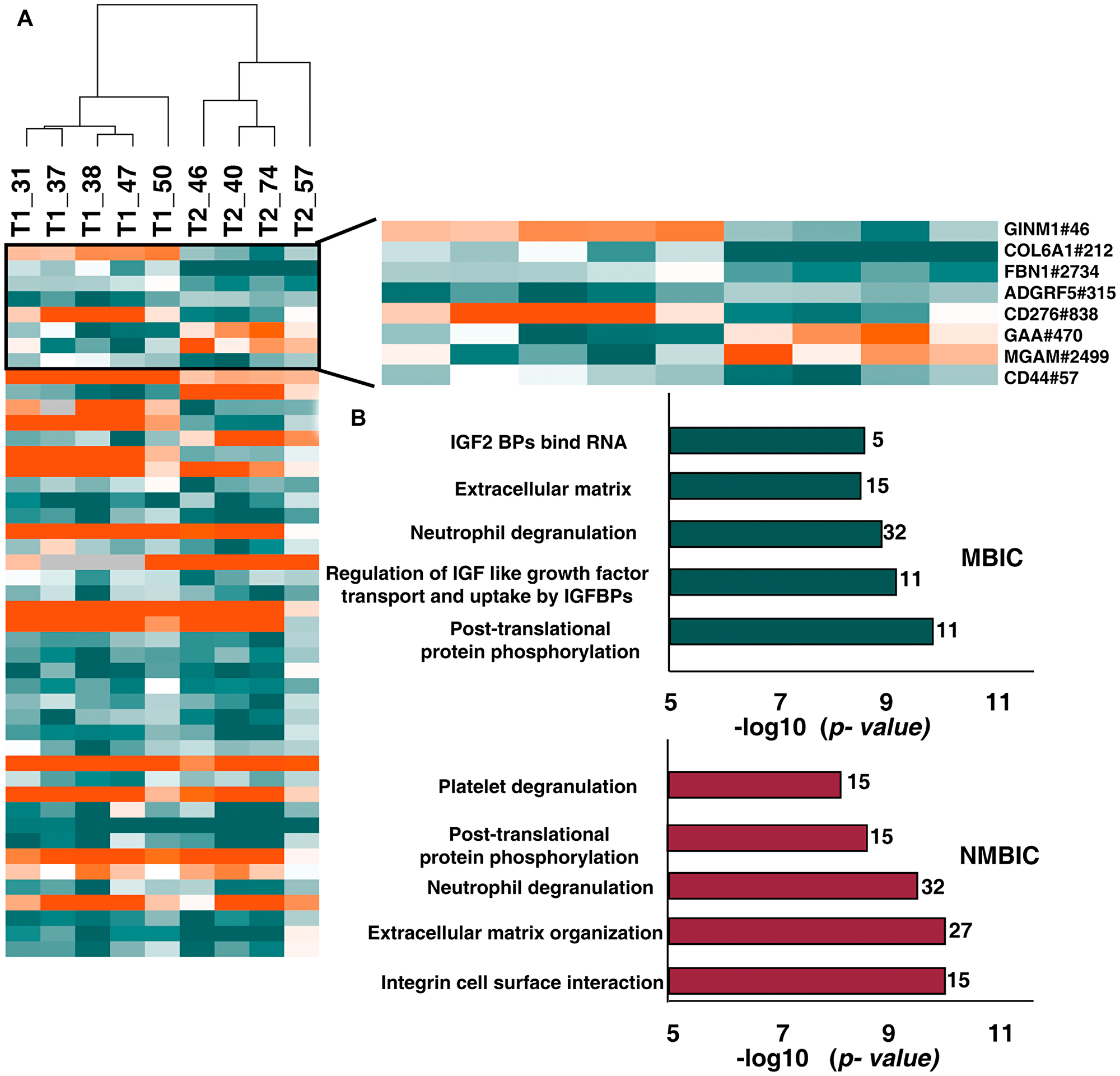 Comparison between N-glycoproteome and proteome of NMIBC and MIBC patients.