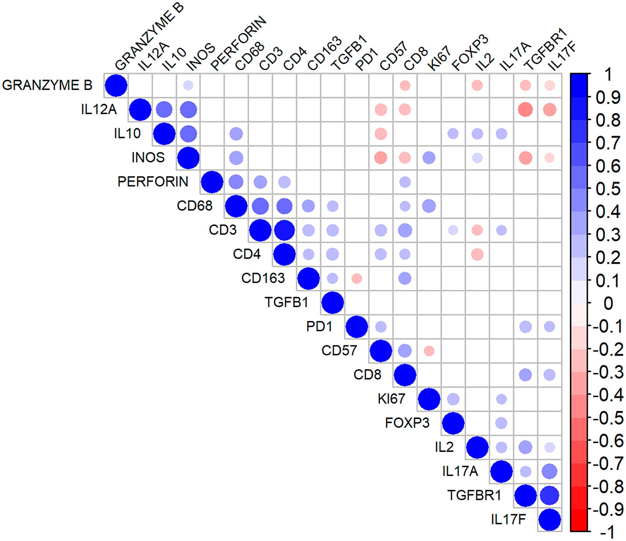 Correlation matrix for the immunohistochemical markers in follicular lymphoma.