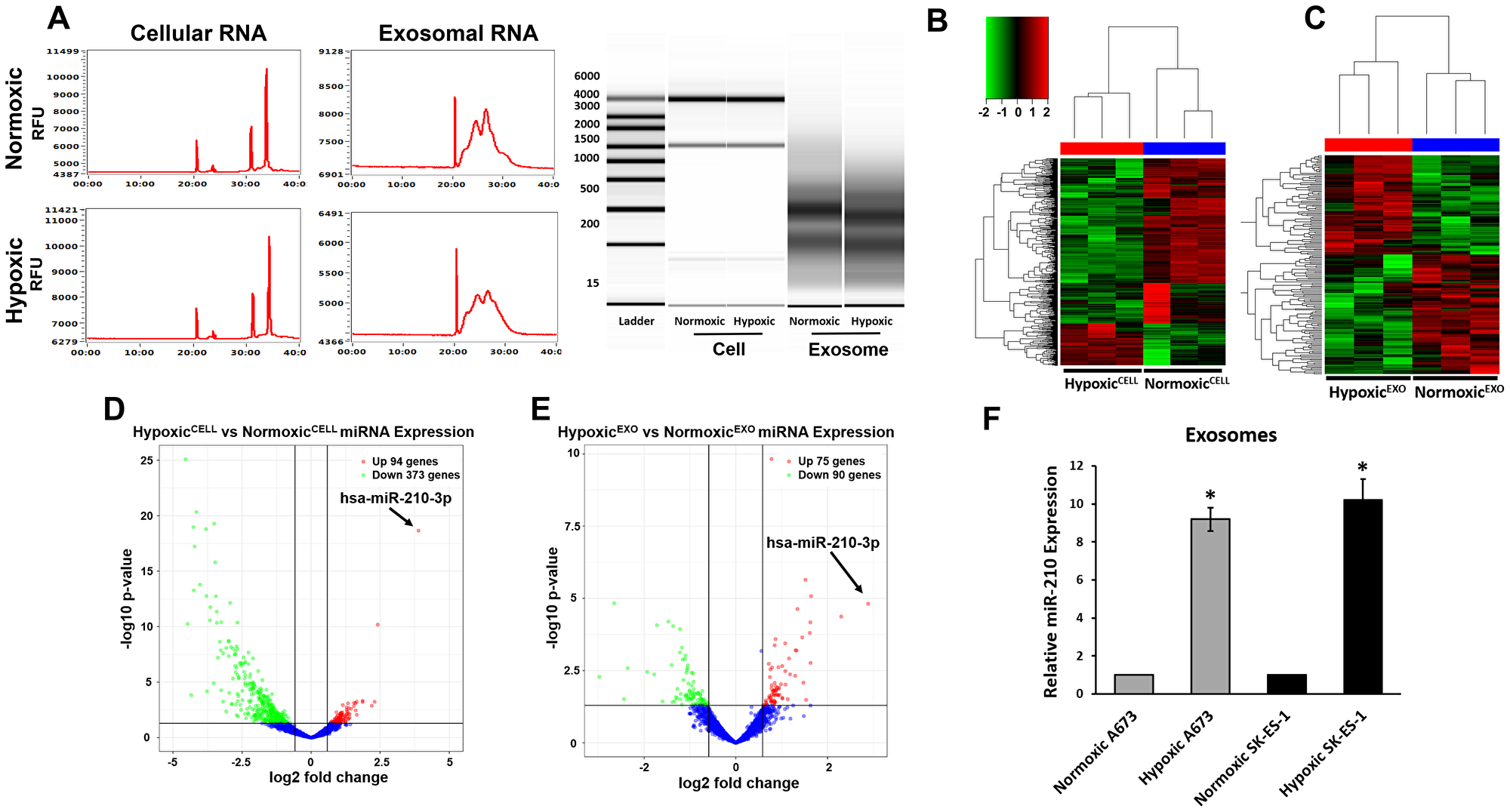 EWS HypoxicEXO carry specific hypoxia regulated miRNA.