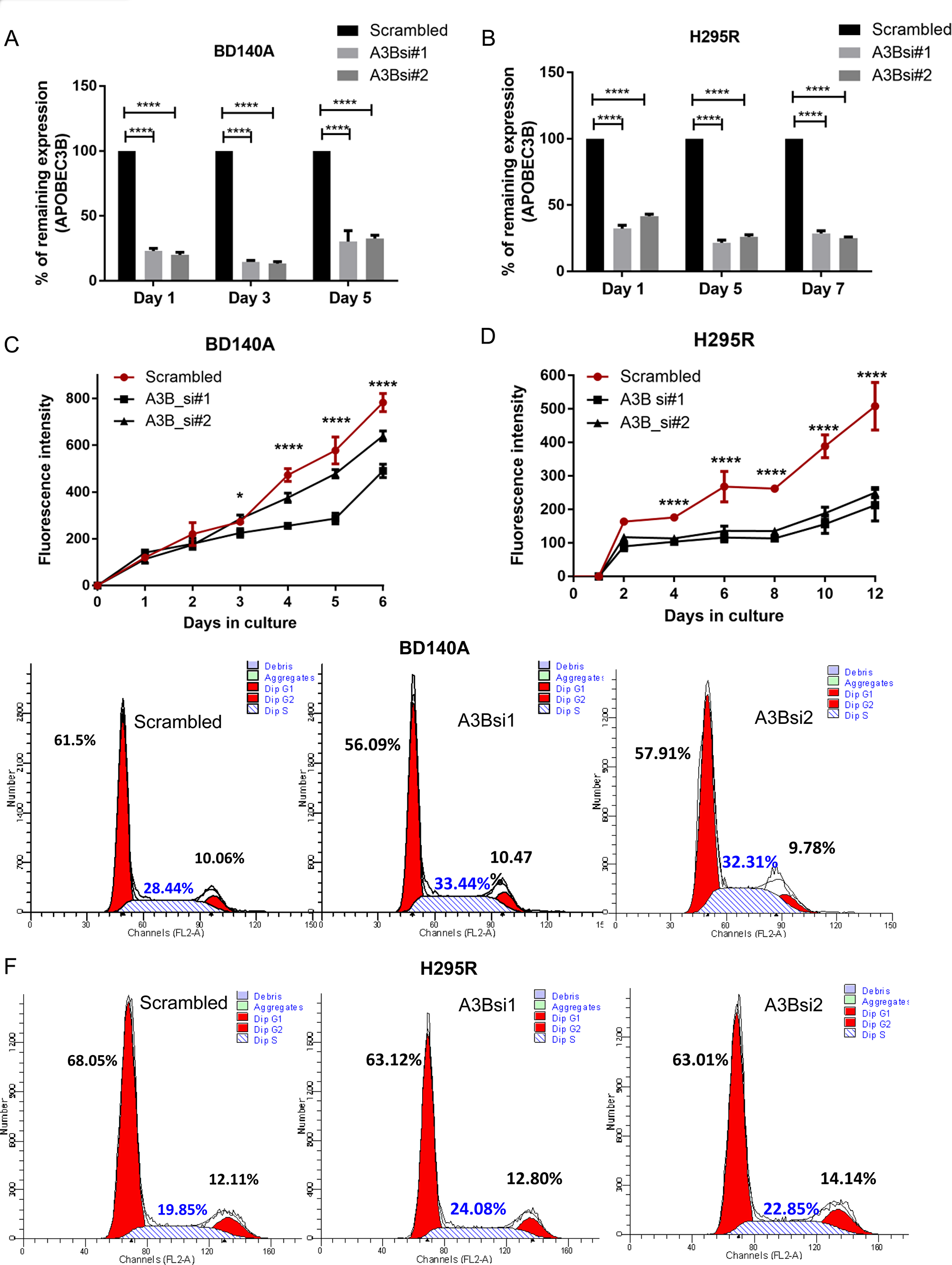 Knockdown of APOBEC3B reduces cell proliferation and induces S phase arrest.