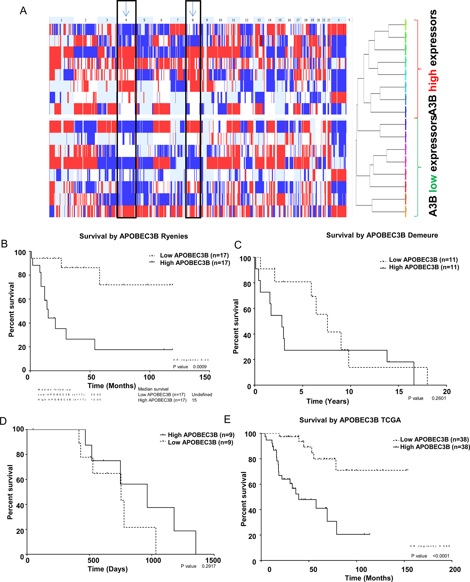 APOBEC3B expression is associated with copy number alterations.
