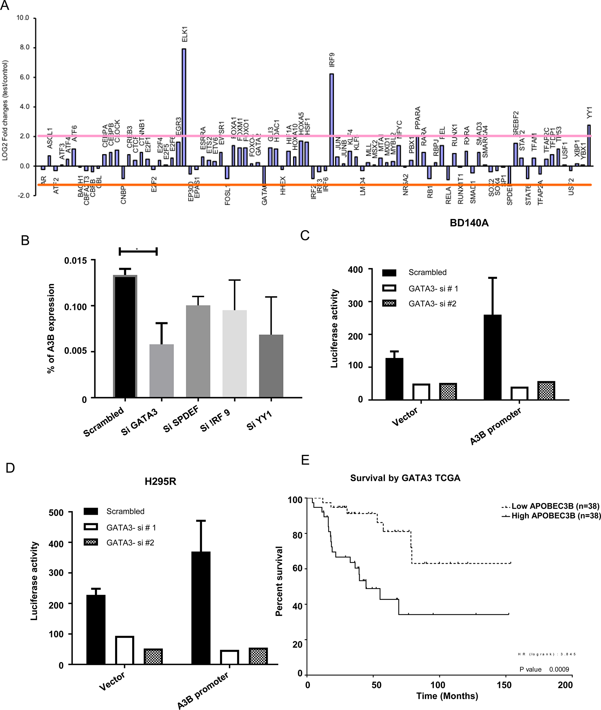 APOBEC3B gene expression is regulated by GATA3.