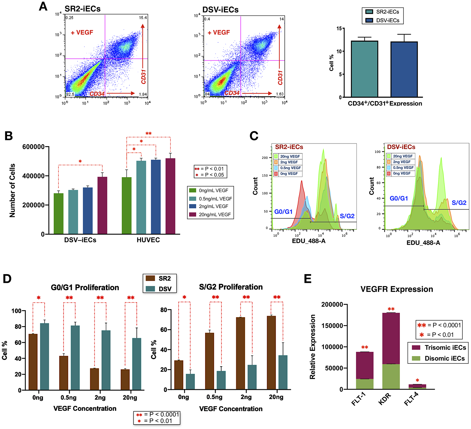 Endothelial differentiation efficiency, VEGF response sensitivity, and proliferative potential of disomic and trisomic iECs.