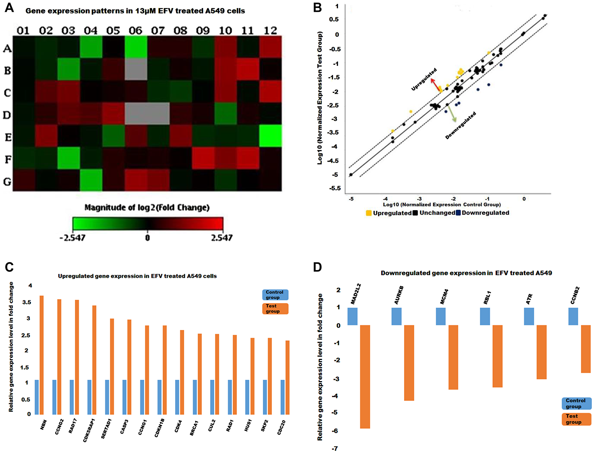 The cell cycle gene expression profile in EFV treated A549 cells.