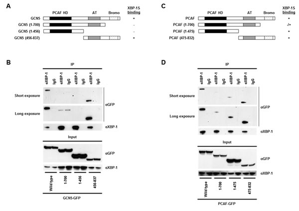 Domain study of GCN5 and PCAF.