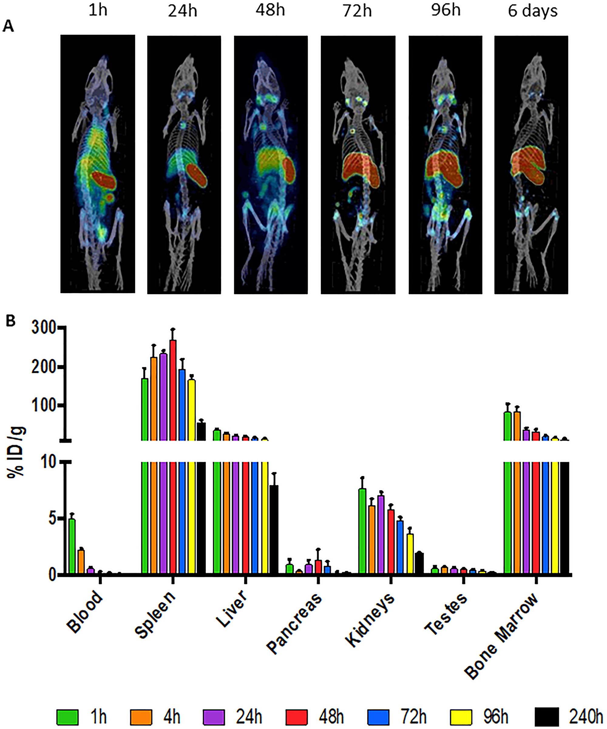 111In-30F11 anti-CD45 antibody homes to immune organs.