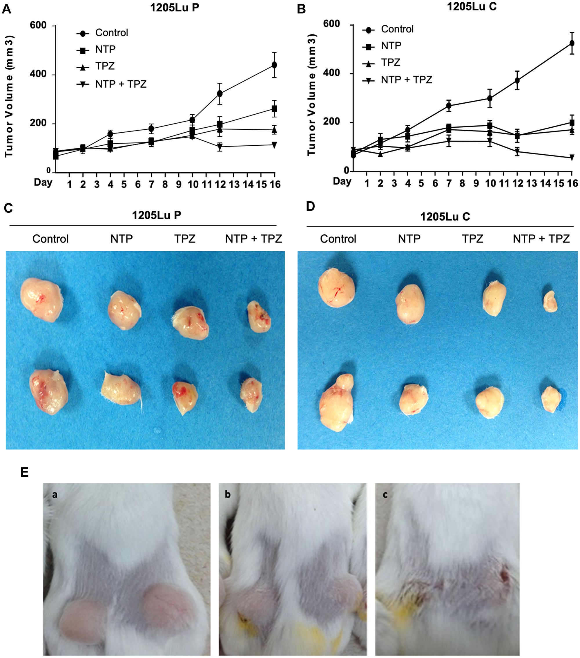 Effects of gap junctions on in vivo treatment with NTP+TPZ.