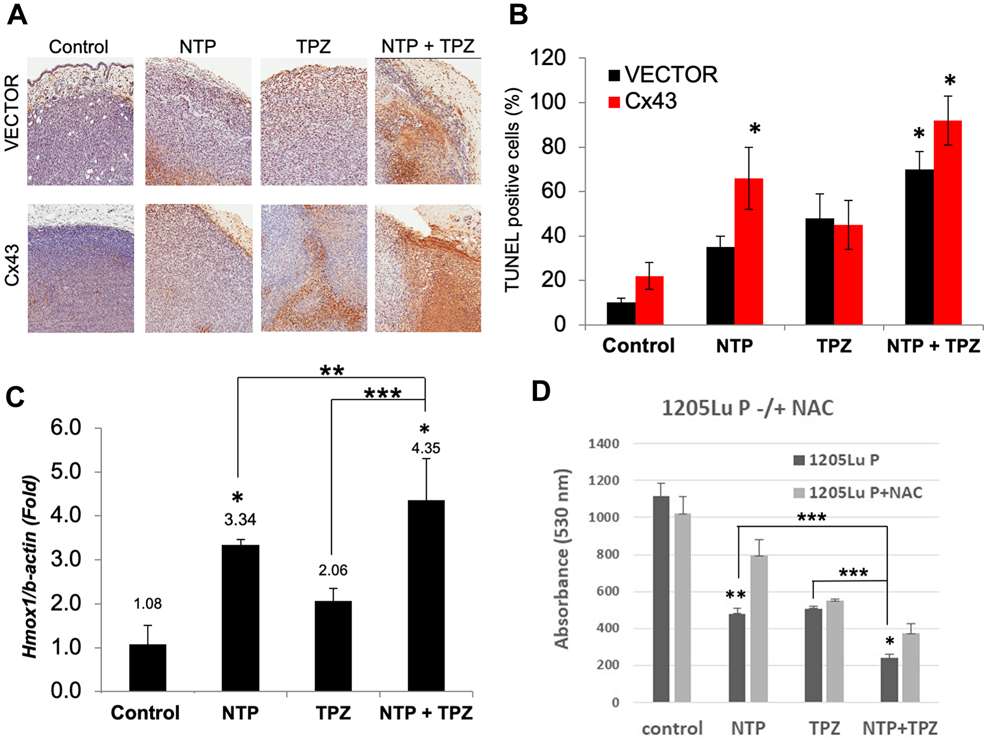 Analysis of apoptosis and oxidative stress on in vivo treatment with NTP+TPZ.