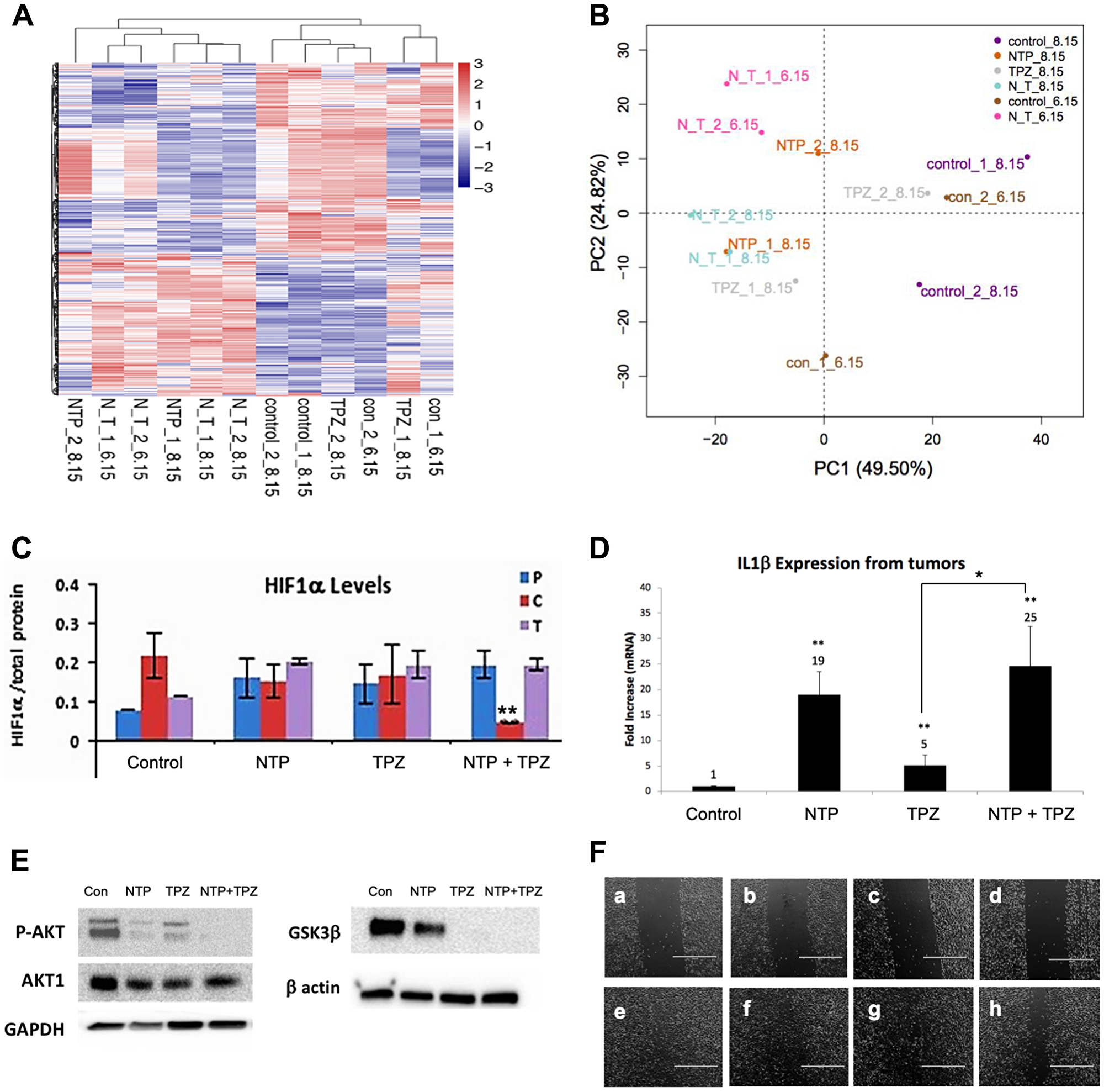 Gene expression changes following NTP+TPZ treatment.