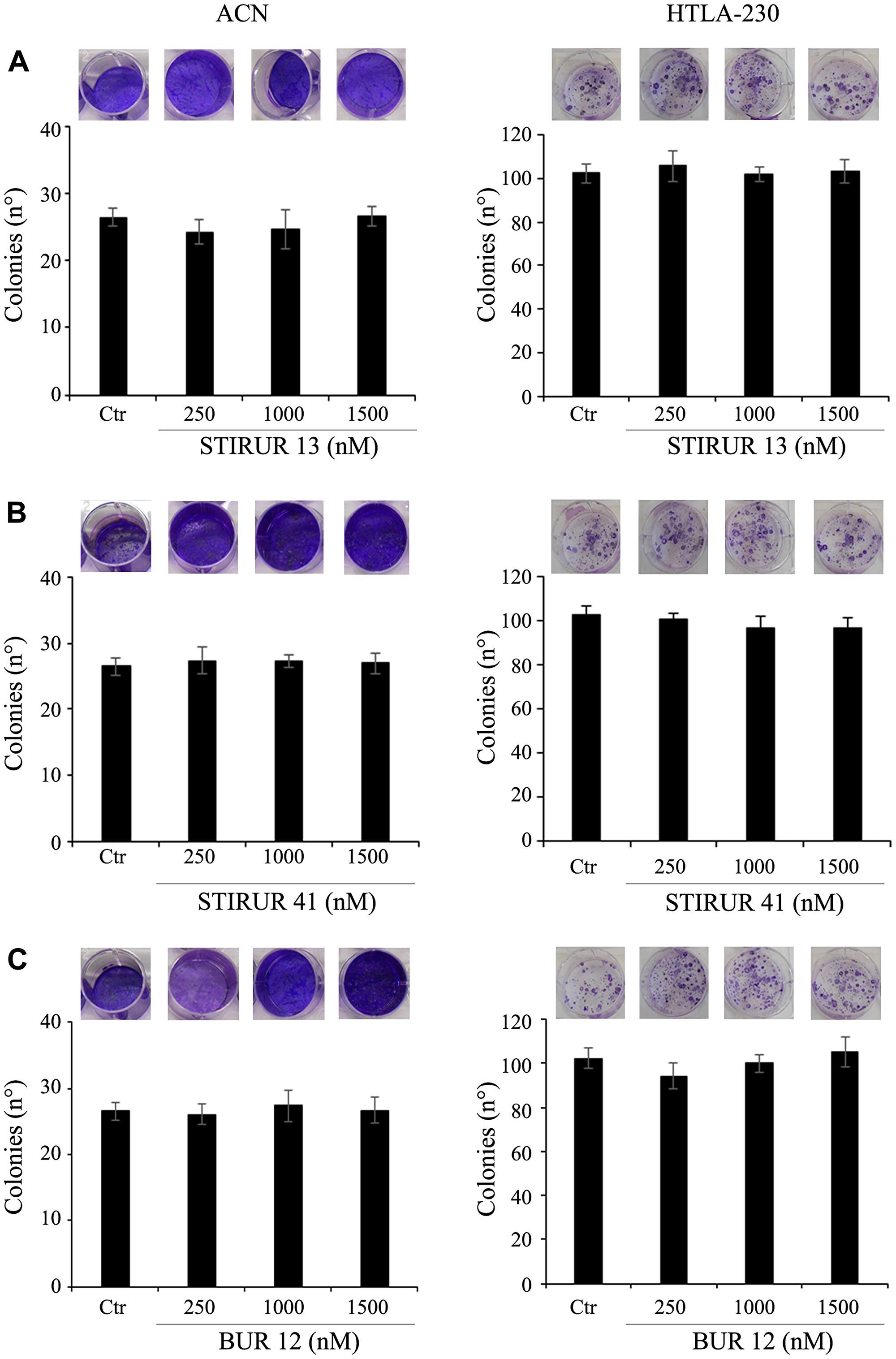 STIRUR 13, STIRUR 41 and BUR 12 did not affect the clonogenic potential of ACN and HTLA-230 cells.